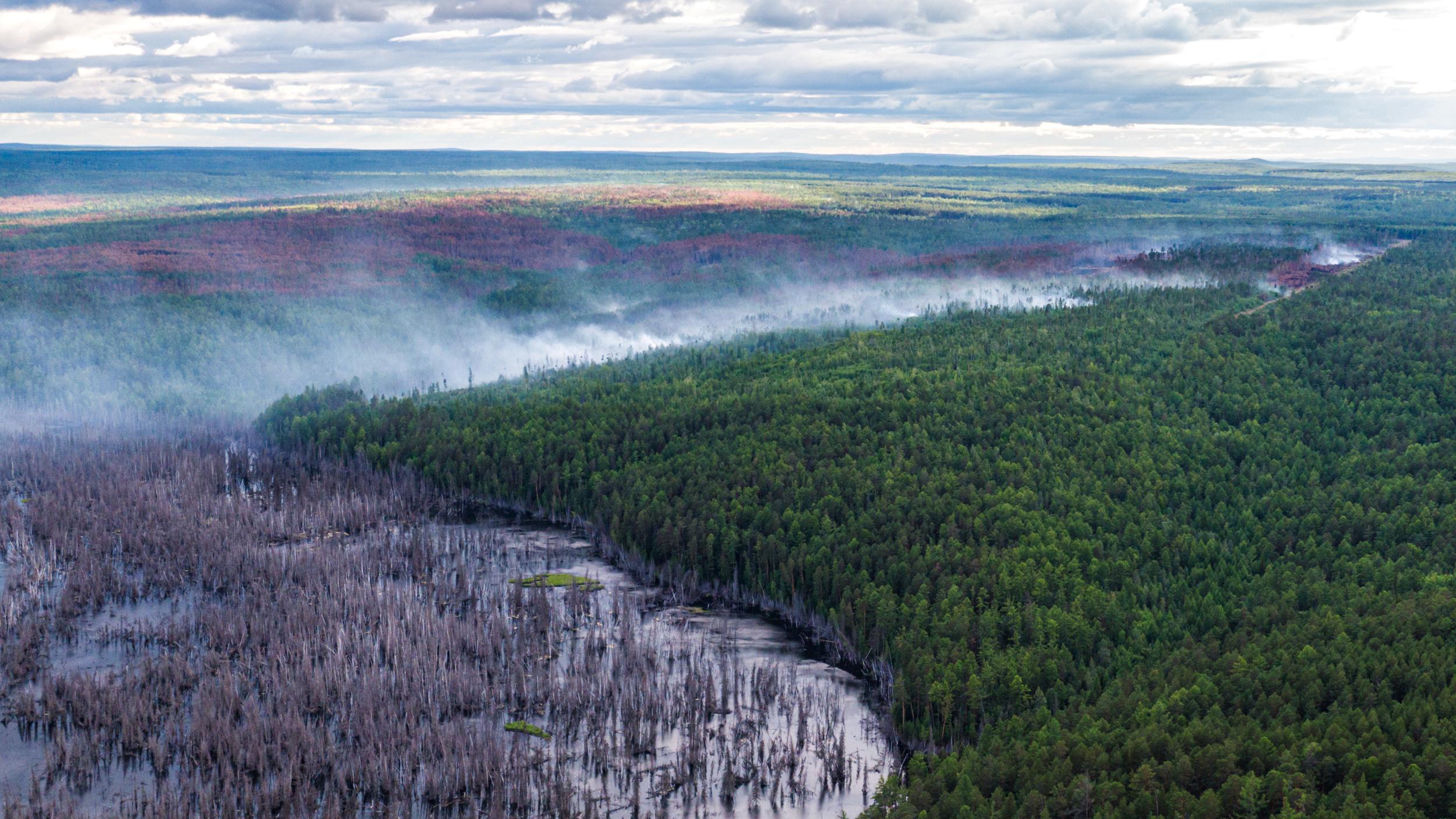 (Julia Petrenko/Greenpeace via REUTERS)