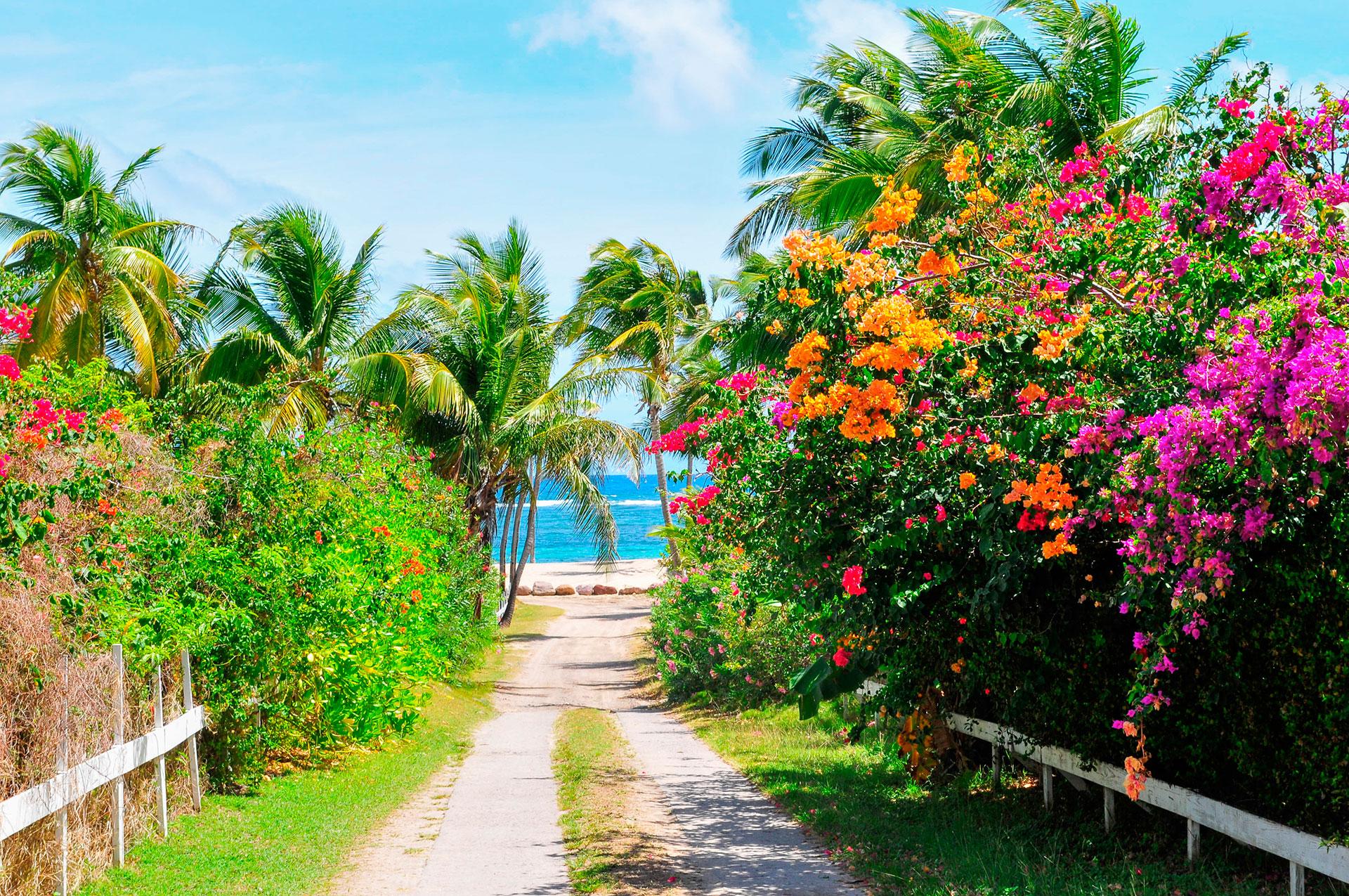 Puede que sea más pequeña que St. Kitts, pero Nevis tiene lo suyo. El lugar de nacimiento de Alexander Hamilton es casi perfectamente redondo, con suaves pendientes que se elevan hasta la cima de su volcán inactivo, y la isla es conocida por sus posadas históricas y complejos turísticos de primera categoría