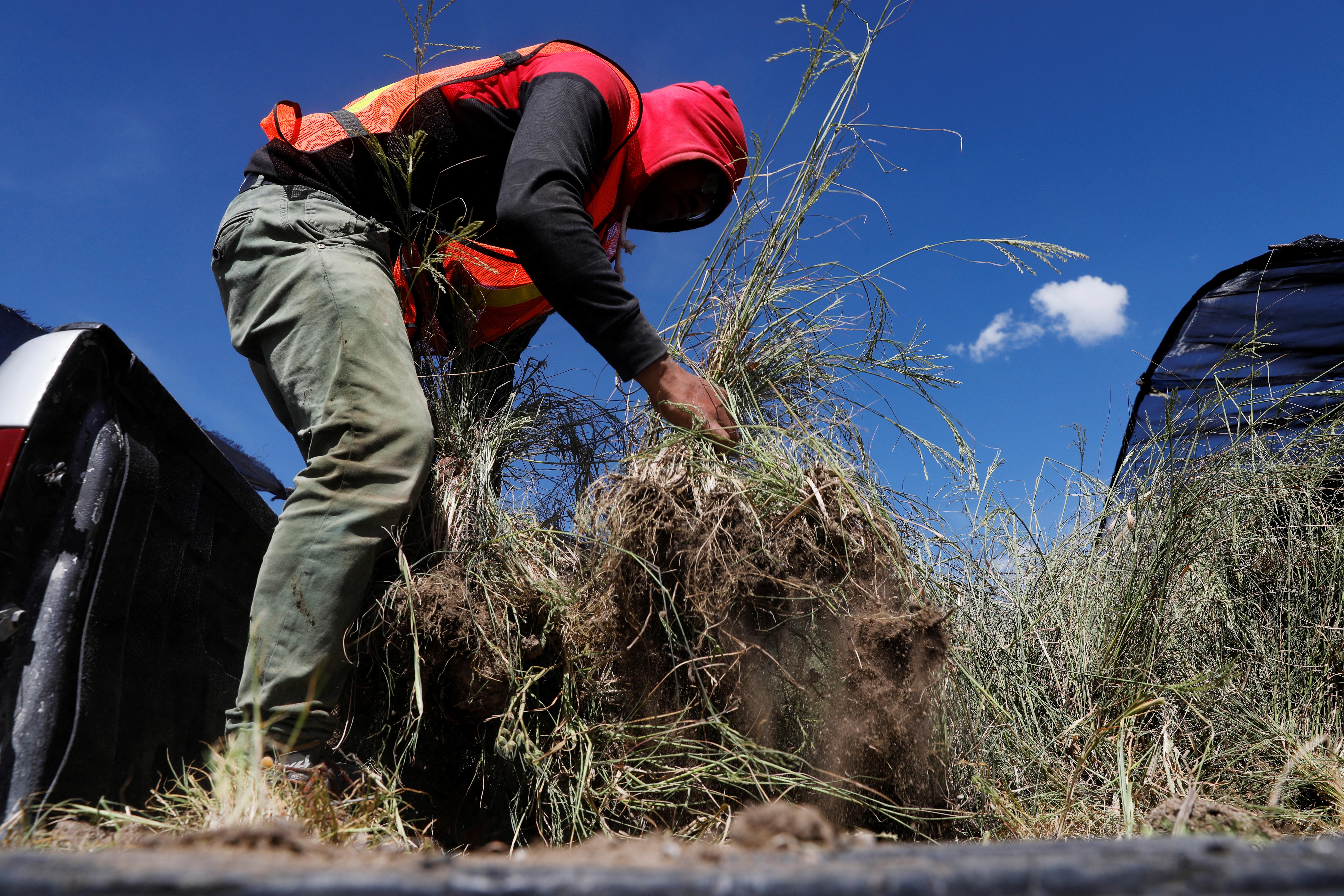 Un trabajador prepara plantas nativas en el centro de jardinería cerca de la zona cancelada del aeropuerto como parte de un proyecto para conservar 12,200 hectáreas de tierra en Texcoco, en las afueras de la Ciudad de México, México, 3 de septiembre de 2020. Fotografía tomada el 3 de septiembre de 2020.