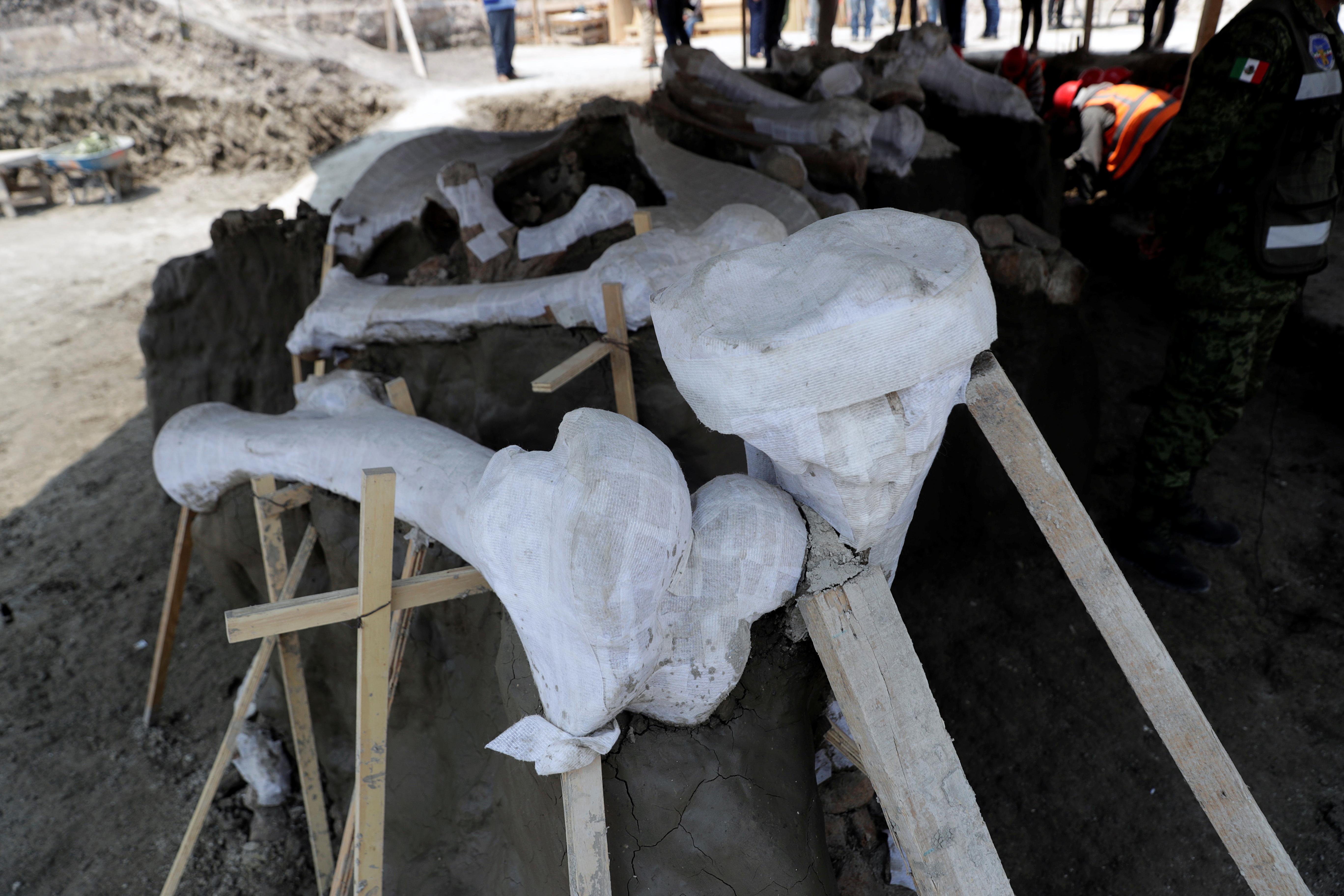 Manzanilla especula que la mayoría de los mamuts murieron de esta manera, aunque hay evidencia de que hace unos 10,000 años los primeros humanos también pudieron haber cazado a las bestias de 20 toneladas con flechas y lanzas de pedernal, o cavado pozos rudimentarios en aguas poco profundas para atraparlos.