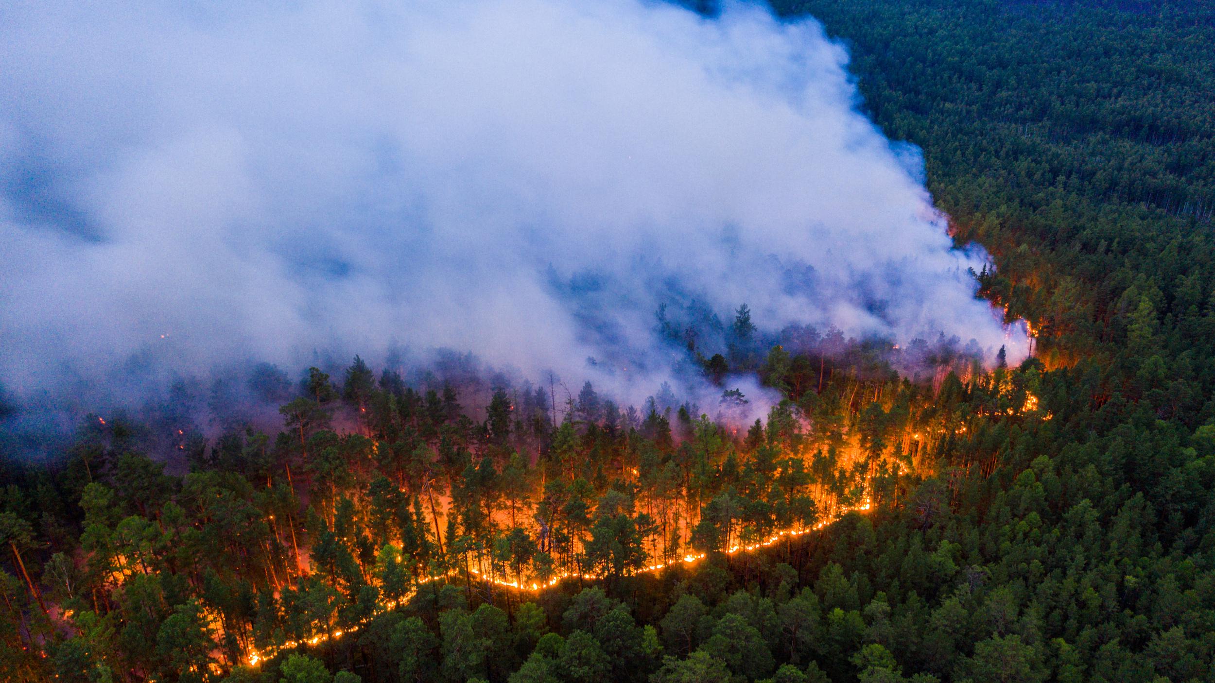 El incendio en Krasnoyarsk (Julia Petrenko/Greenpeace via REUTERS)