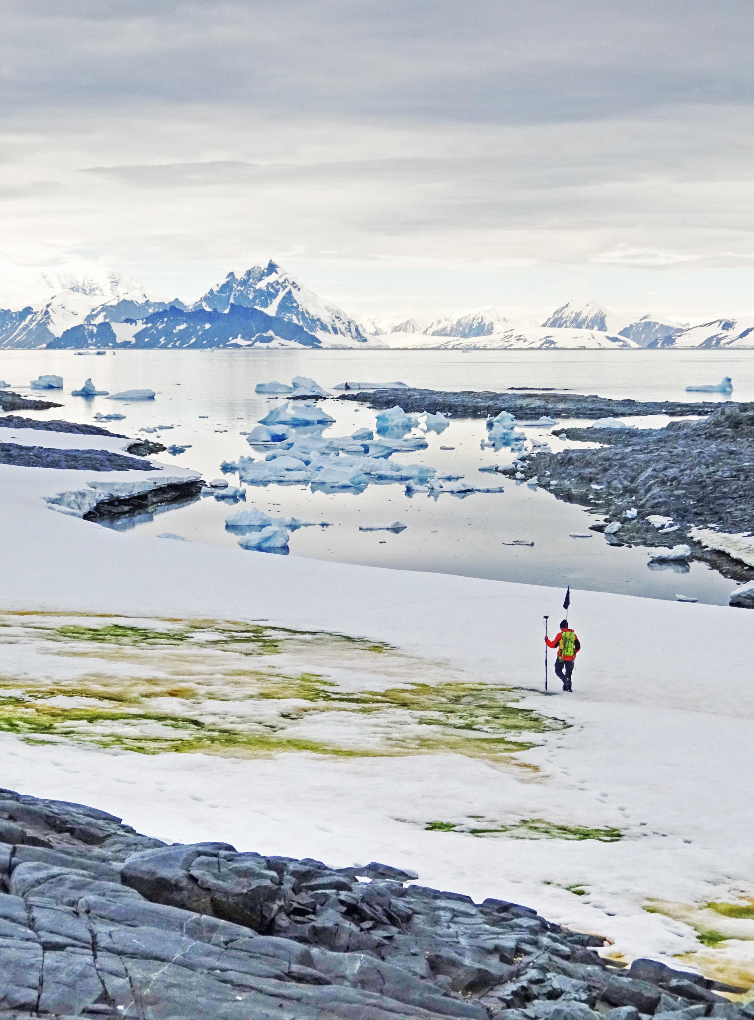 Una fotografía tomada en 2018 y publicada el 19 de mayo de 2020 por la Universidad de Cambridge y Matthew Davey muestra al investigador Andrew Gray geoetiquetado las algas de nieve que florecen en la isla de Anchorage, cerca de la estación de Davis, en la Antártida. (Foto de Matthew Davey / Universidad de Cambridge / AFP)