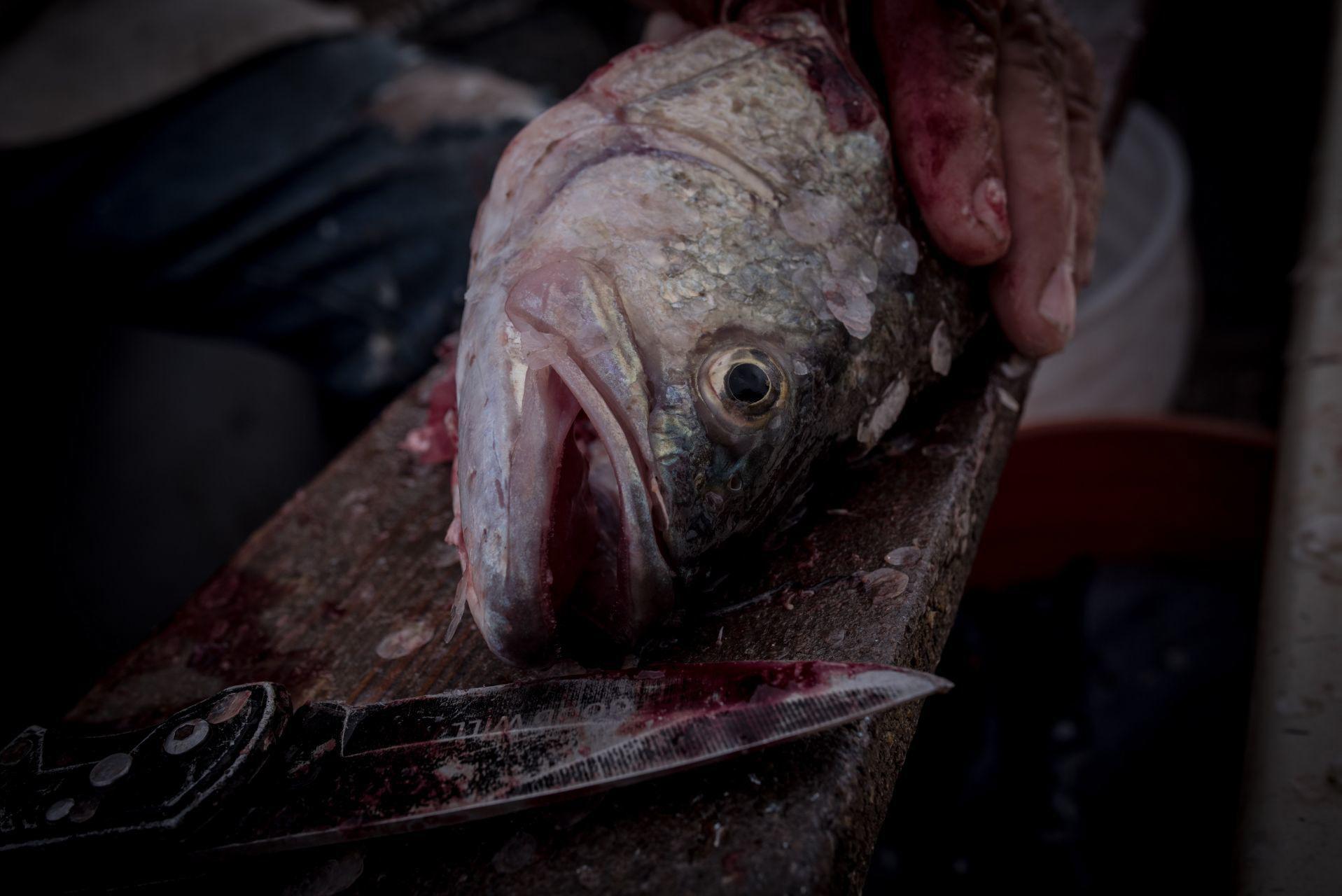 Pedro quita la piel a un pescado después de una jornada de pesca. San Francisco de Conchos, Chihuahua, México. El 18 de septiembre de 2020.
