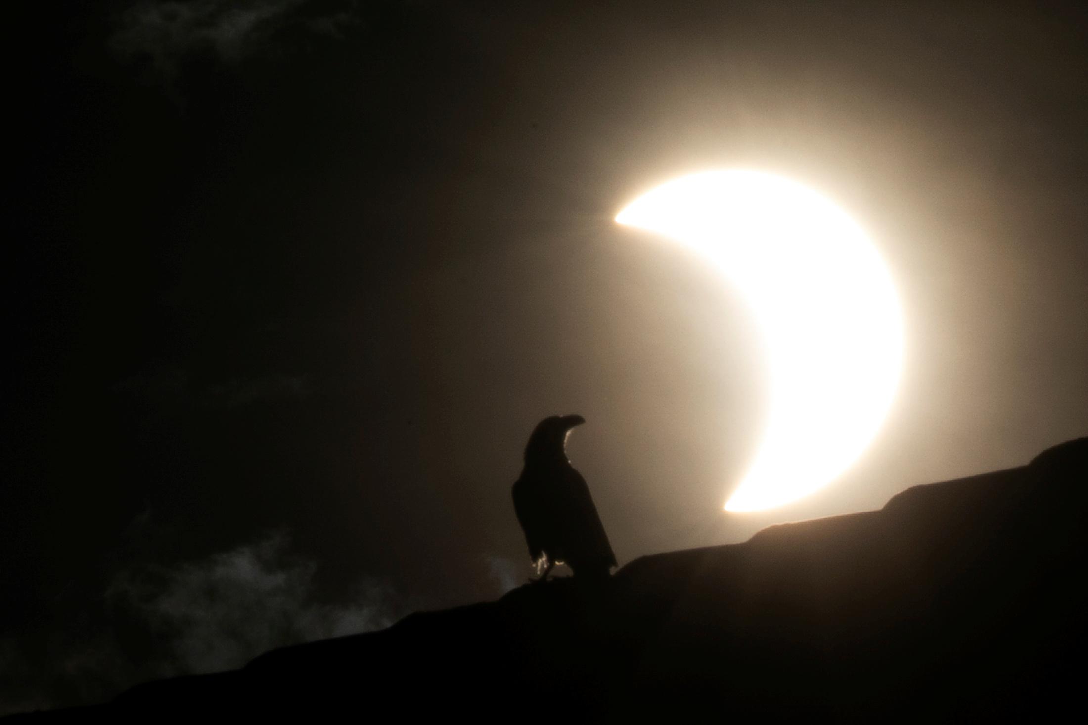 Un cuervo se ve y de fondo el eclipse