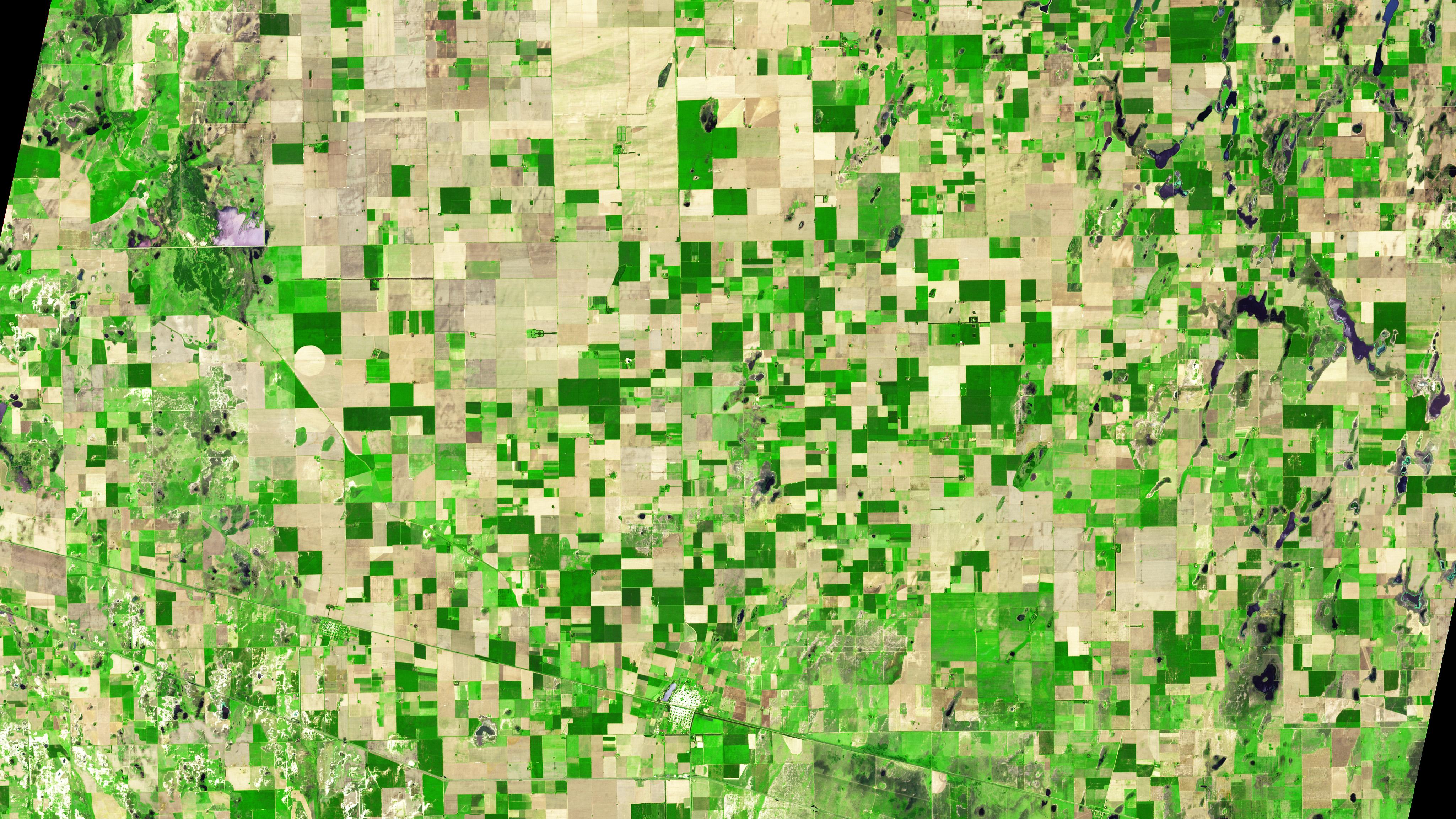La Pampa: un bosque con forma de guitarra crece en medio de las tierras de cultivo