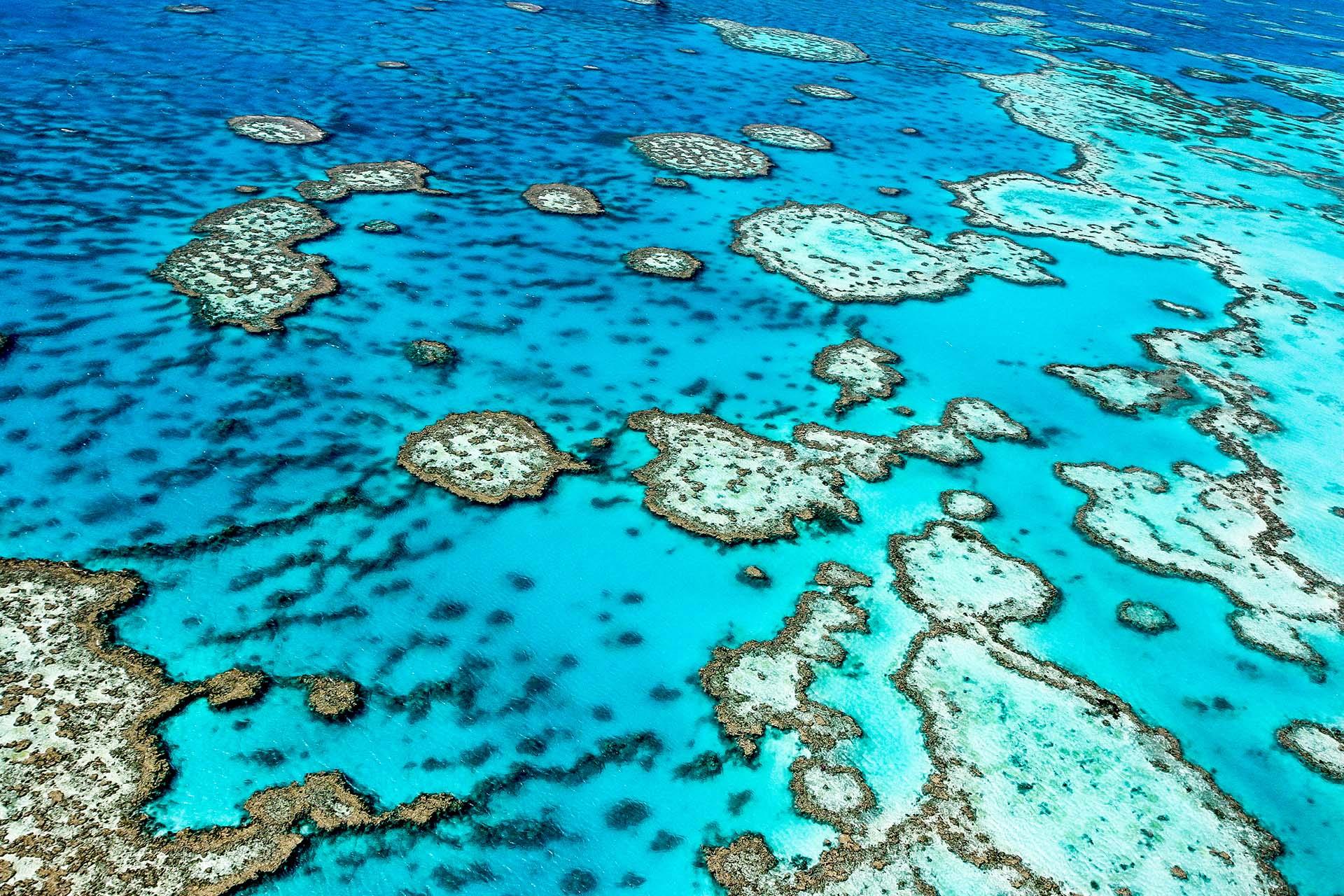 Ubicada frente a la costa noreste de Australia, la Gran Barrera de Coral tiene 2,300 km de largo, lo que la convierte en el sistema de arrecifes de coral más grande del mundo y una de las siete maravillas naturales del mundo. Para poner el tamaño en perspectiva, el arrecife es el único ser vivo visible desde el espacio y es más grande que la Gran Muralla de China