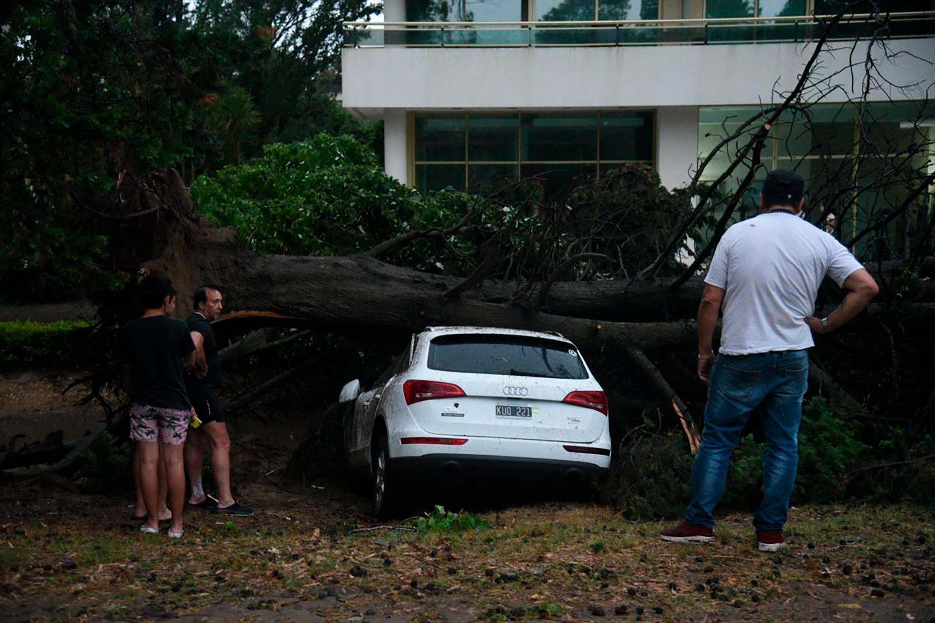 La caída de árboles lastimó a tres personas, dos locales de Pinamar y un turista