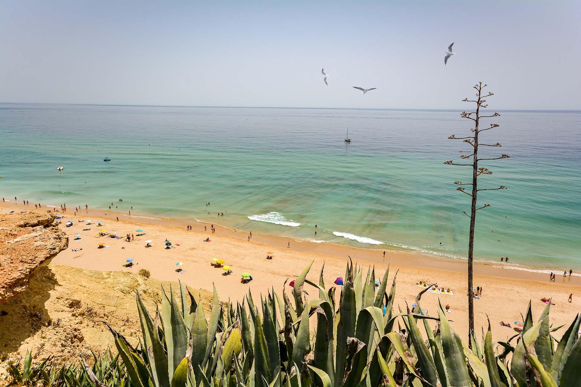 """Algarve es una de las regiones menos afectadas por el coronavirus en Europa y Lagos es una de las ciudades menos afectadas del Algarve. Con hasta 40 veces menos casos que en las regiones europeas más afectadas, el Algarve es un destino favorito para los viajeros que buscan destinos seguros. La playa más grande de Lagos es """"Meia Praia"""". Aunque """"Meia"""" significa """"Medio"""" en portugués, """"Meia Praia"""" es la playa más grande de Lagos. Una playa de 5km te esperan en Portugal, donde no se solicita cumplir con una cuarentena"""