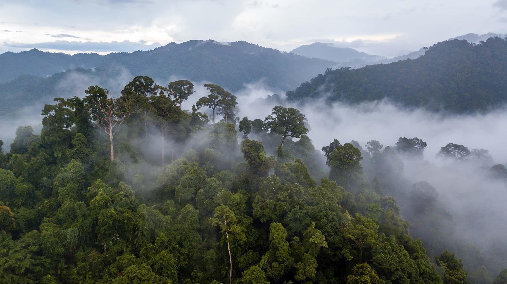 Una parte de la selva tropical más grande del mundo, también se encuentra en Brasil. La selva amazónica cubre aproximadamente el 40% de América del Sur, incluidos Brasil, Ecuador, Perú, Bolivia, Colombia, Venezuela, Guyana, Surinam y la Guayana Francesa. Es el bosque tropical más grande del mundo y es famoso por su biodiversidad