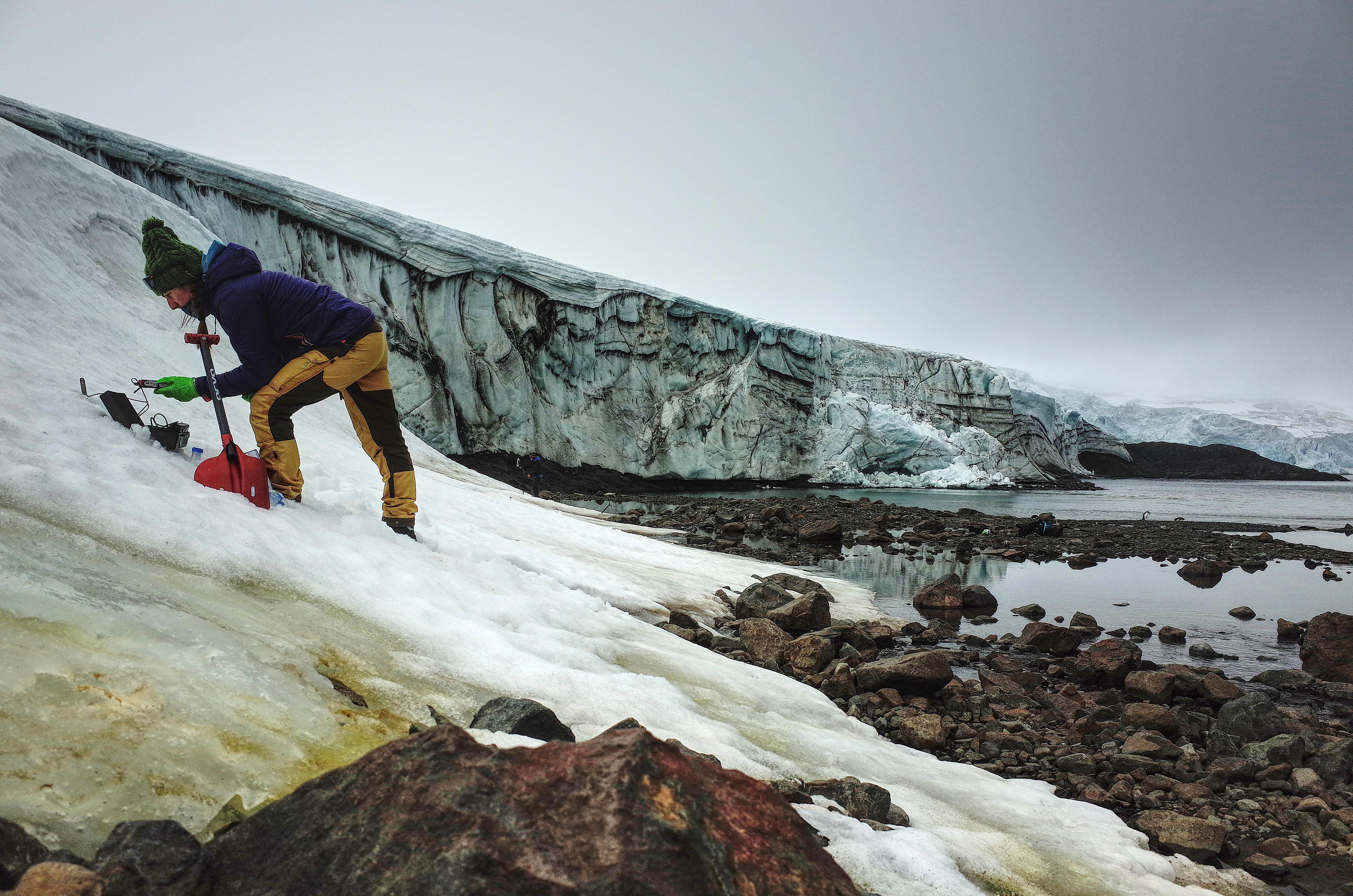 Folleto sin fecha publicada por la Universidad de Cambridge el 20 de mayo de 2020 que muestra a Monika Mendelova tomando muestras de algas en el glaciar Collins, en la Antártida. (AFP PHOTO / Dr Matt Davey - Universidad de Cambridge / SAMS)