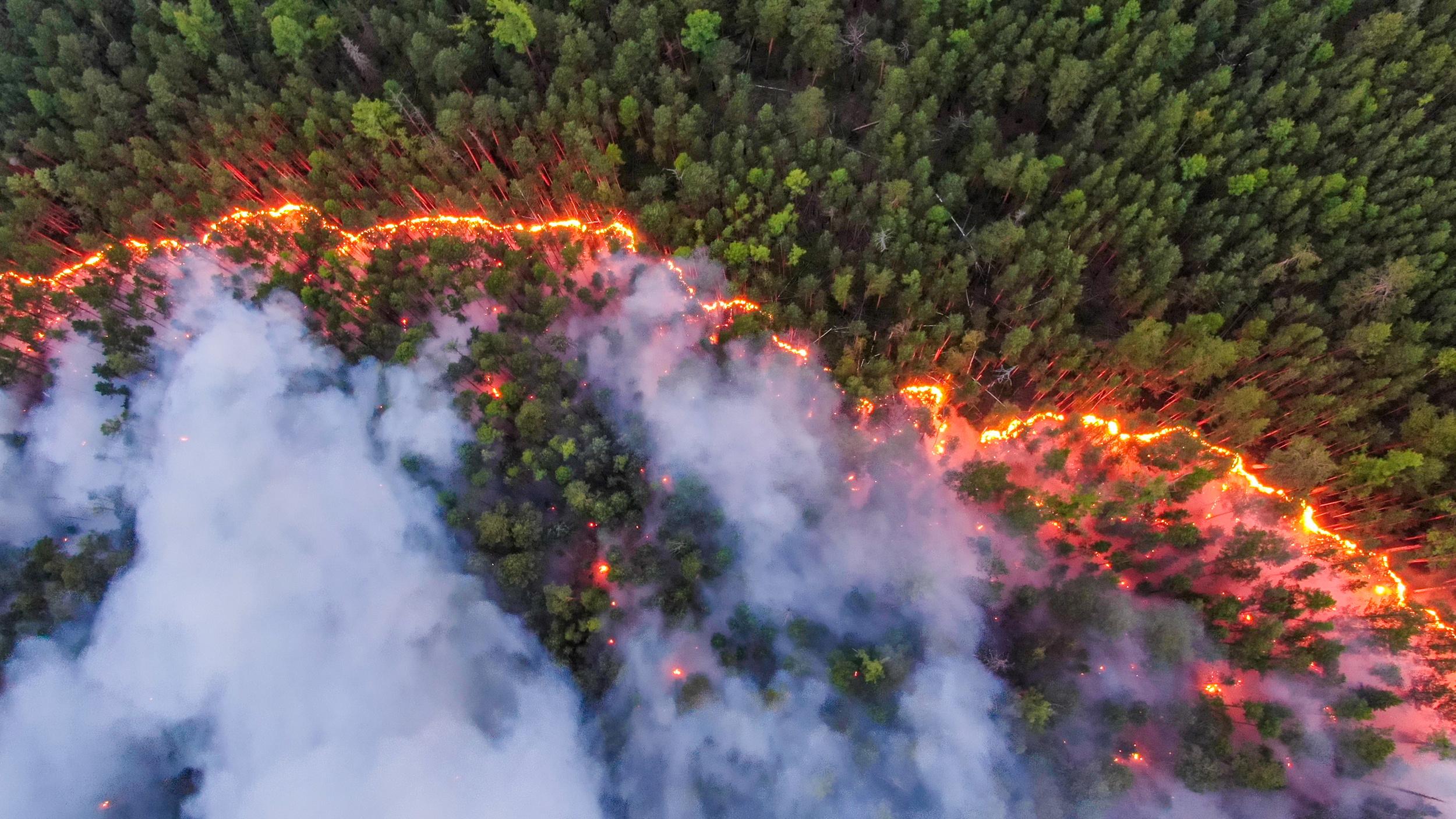 Vista aérea de un incendio en la región de Krasnoyarsk (Julia Petrenko/Greenpeace/Handout via REUTERS)