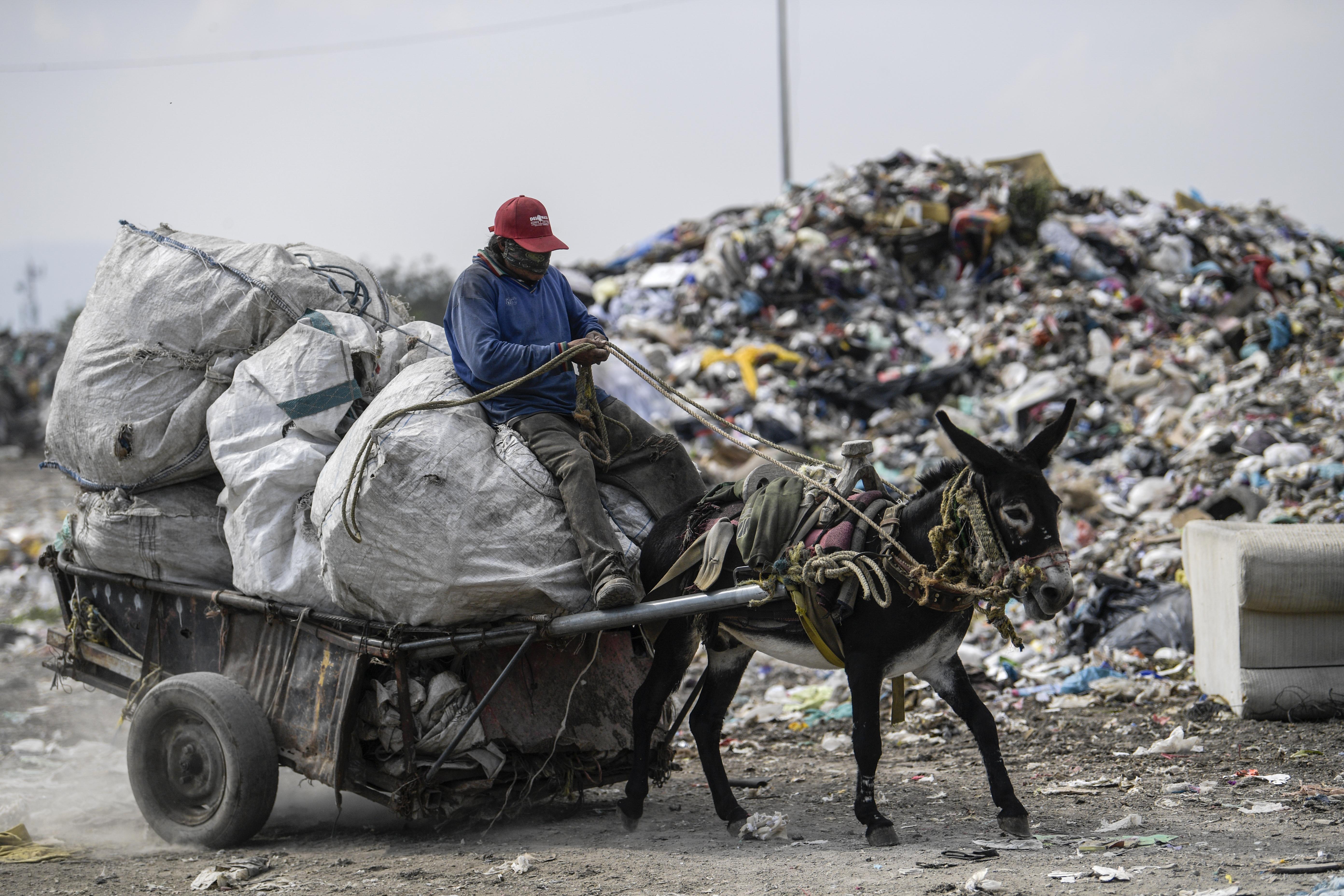 Un trabajador monta un carro tirado por un burro en el basurero