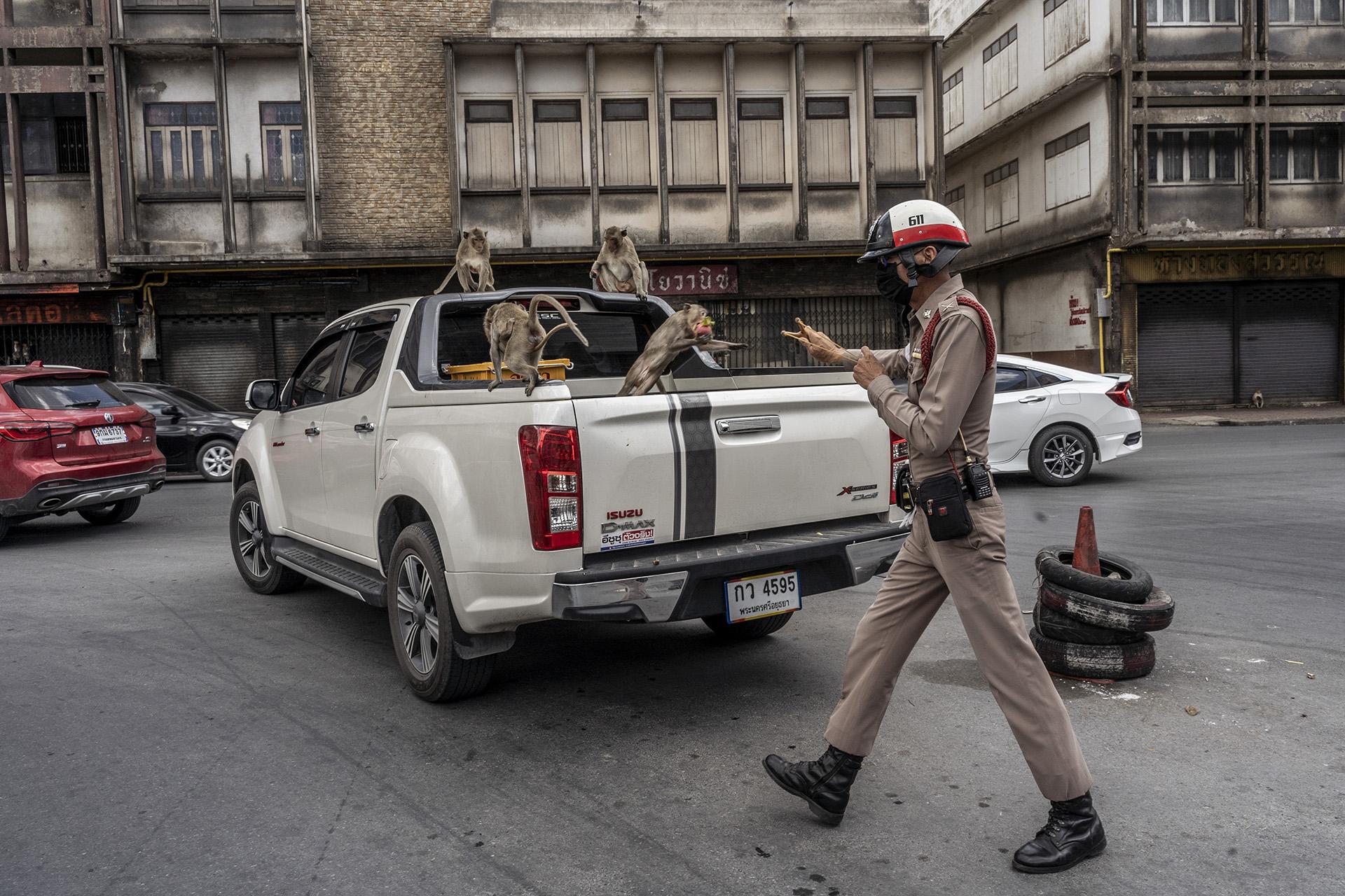 Nirad Pholngeun, un oficial de policia, hace la mímica como si disparara una piedra con su gomera, para intentar asustar a los monos.