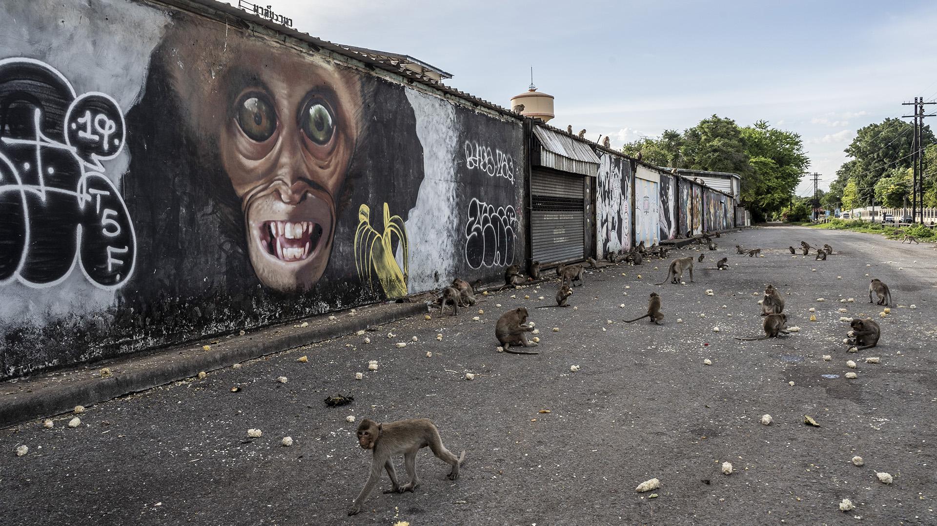 Los monos comen frente a un mural pintado en su honor en una calle de Lopburi