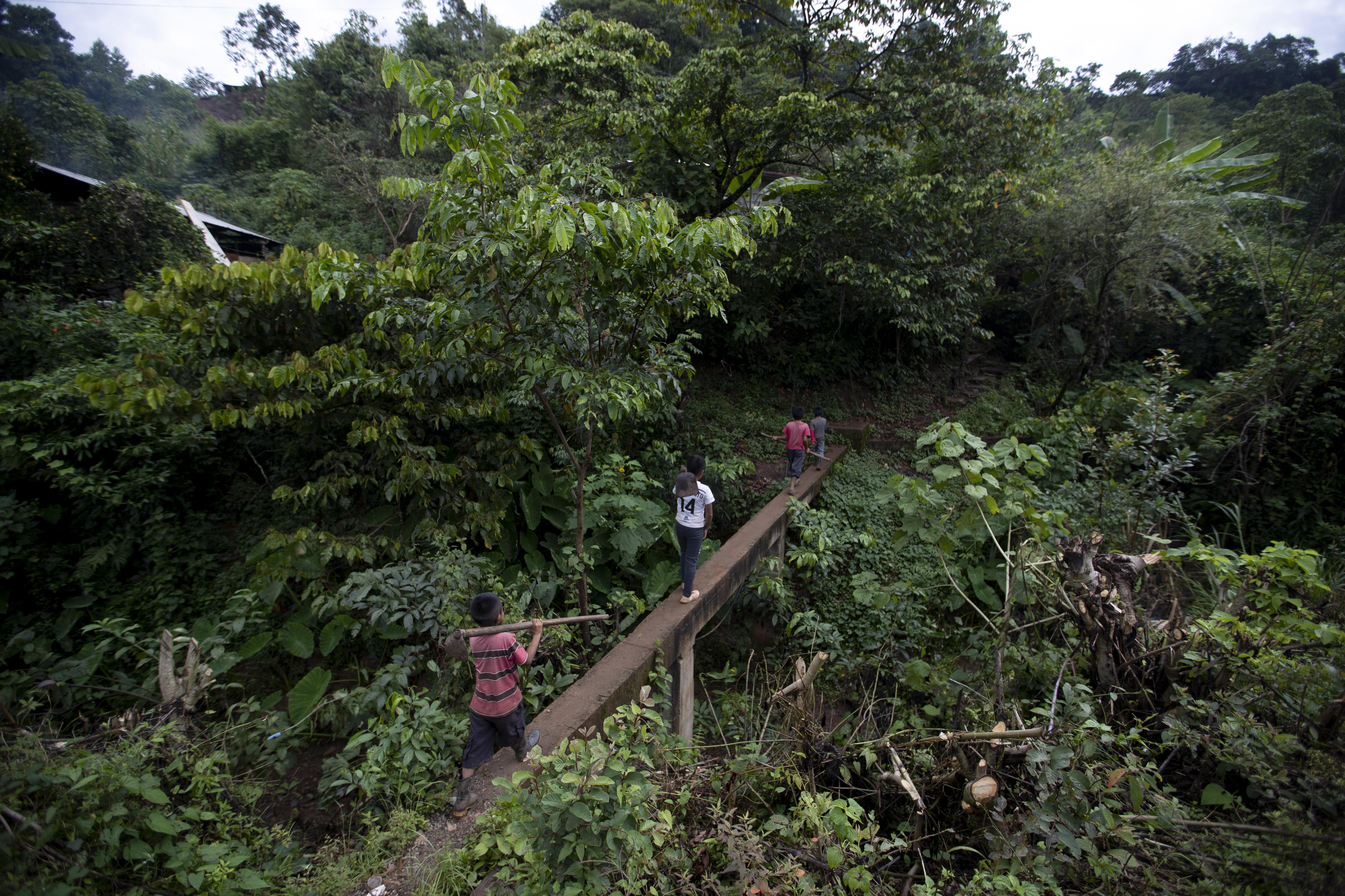 Juan Gabriel Vázquez, al centro, y sus hermanos caminan hacia los campos de maíz para trabajar en la comunidad de Nuevo Yibeljoj en el estado de Chiapas, México, el viernes 11 de septiembre de 2020.