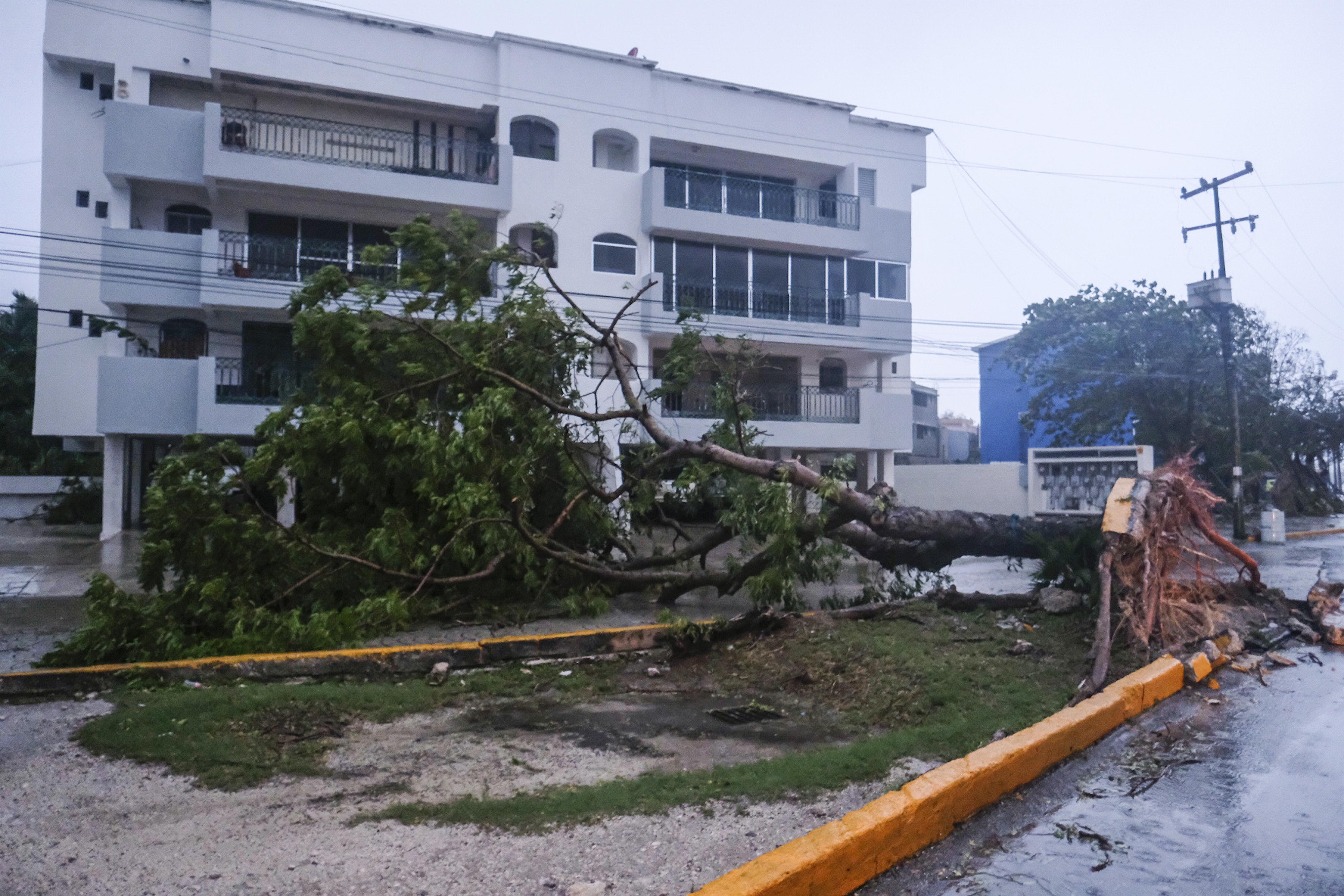 Un árbol yace de costado, derribado por el huracán Delta en Cancún, México, el miércoles 7 de octubre de 2020.