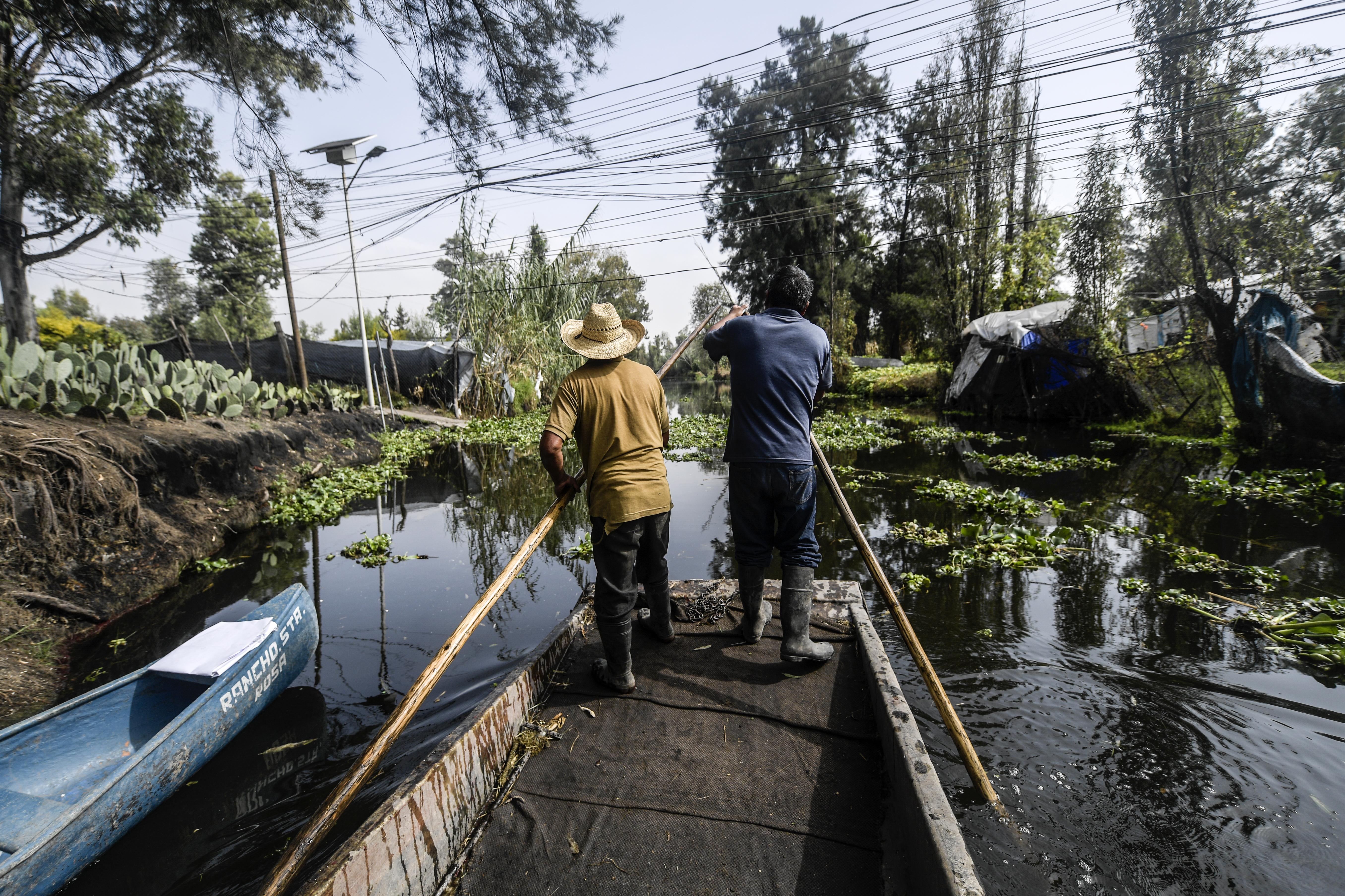 Anselmo Sánchez (izquierda), 63 y Luis Ricardo Sánchez, 36, navegan en un bote mientras se dirigen a cosechar cempasúchil, caléndula mexicana, en un campo de cultivo en una chinampa, en Xochimilco, Ciudad de México, el 13 de octubre de 2020. En medio de la nueva pandemia de coronavirus COVID-19.