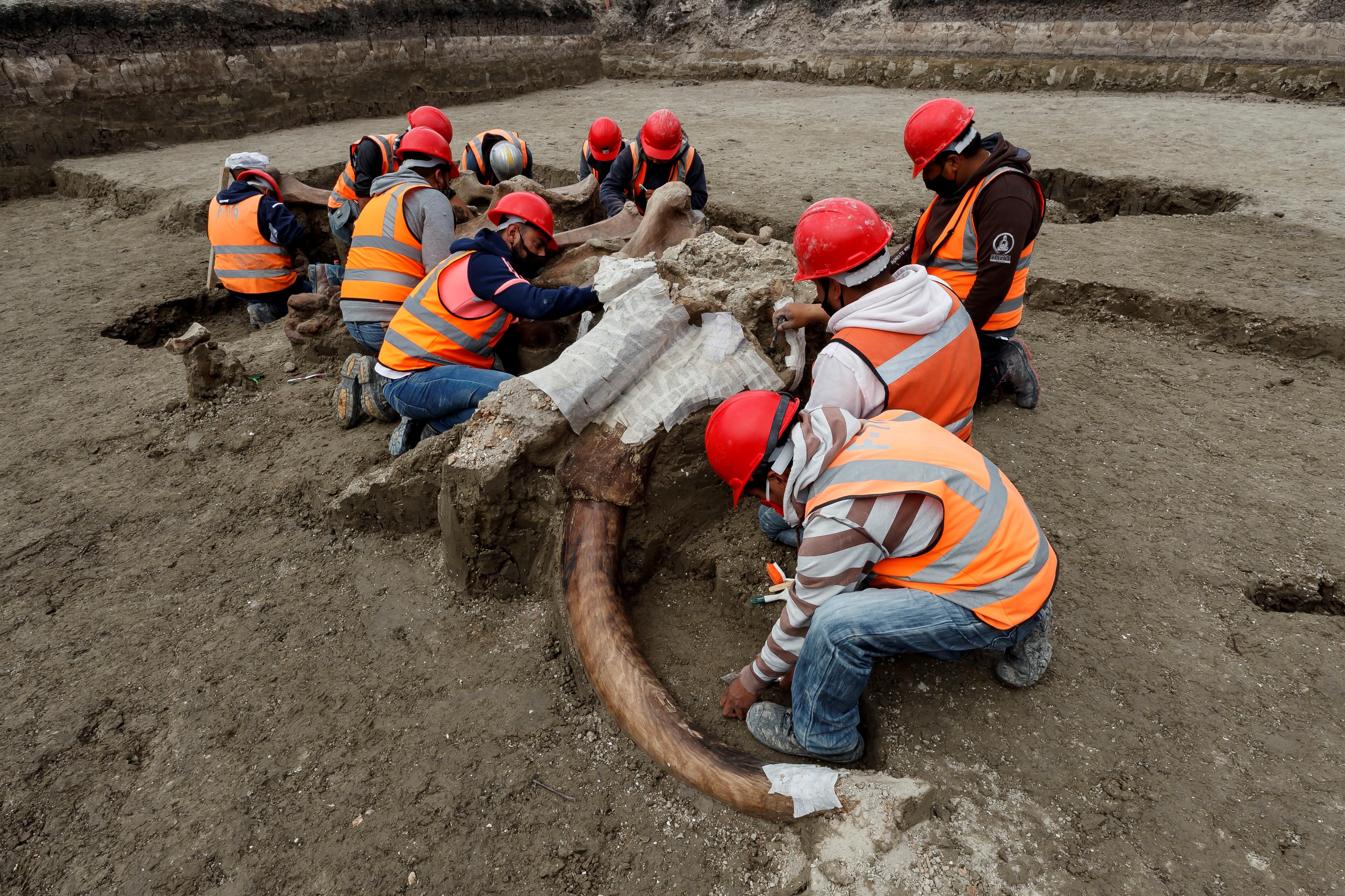 Una decena de trabajadores y especialistas escarban para extraer los huesos de uno de ellos, cuidando que el montículo de tierra que sostiene al otro no se desmorone.