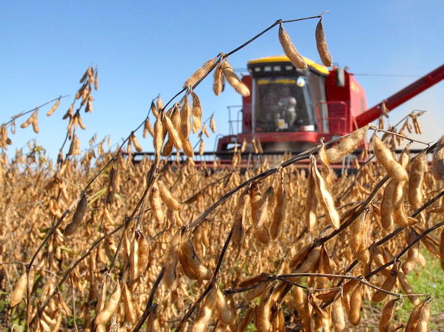 Para el sector agrícola de Paraguay, los costos de producción bajaron y, sumados a los buenos rendimientos de soja obtenidos, ayudaron a compensar las pérdidas del año 2019. (FOTO: ARCHIVO)