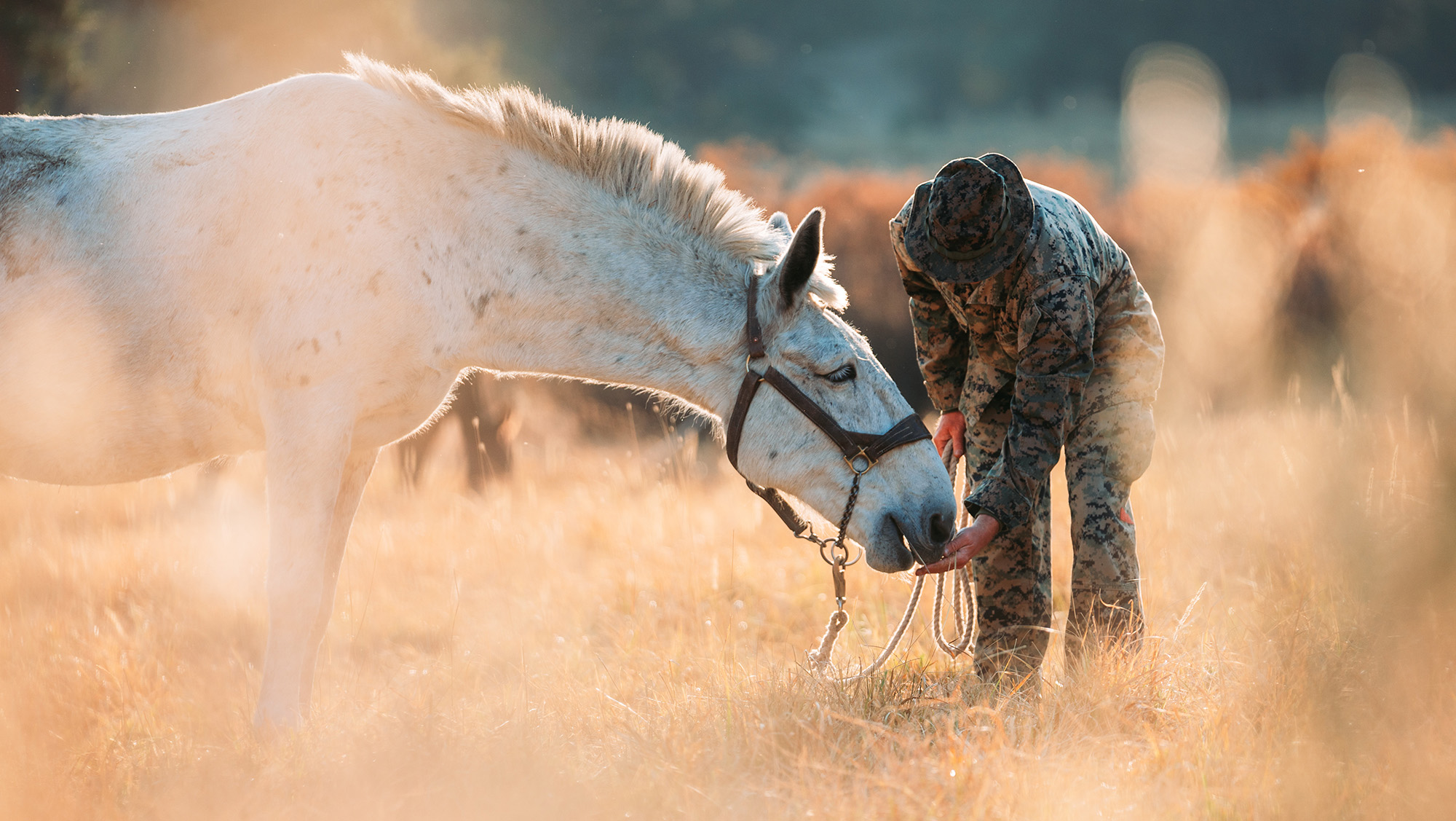 Cpl. William L. Stewart feeds a mule during an animal packer course as a part of Mountain Training Exercise 1-21 at the Marine Corps Mountain Warfare Training Center in Bridgeport, Calif., Oct. 8, 2020. (Cpl. Rachel K. Young-Porter/Marine Corps)