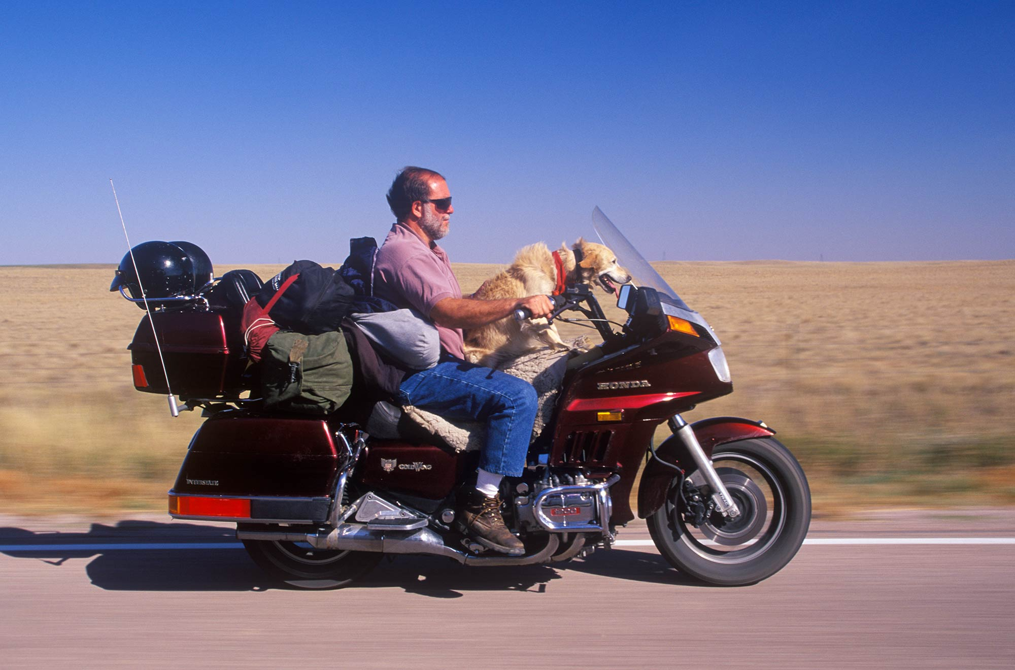 This rider and his dog are ready for the long haul, protected from the wind and elements by the Honda Gold Wing's tall windshield