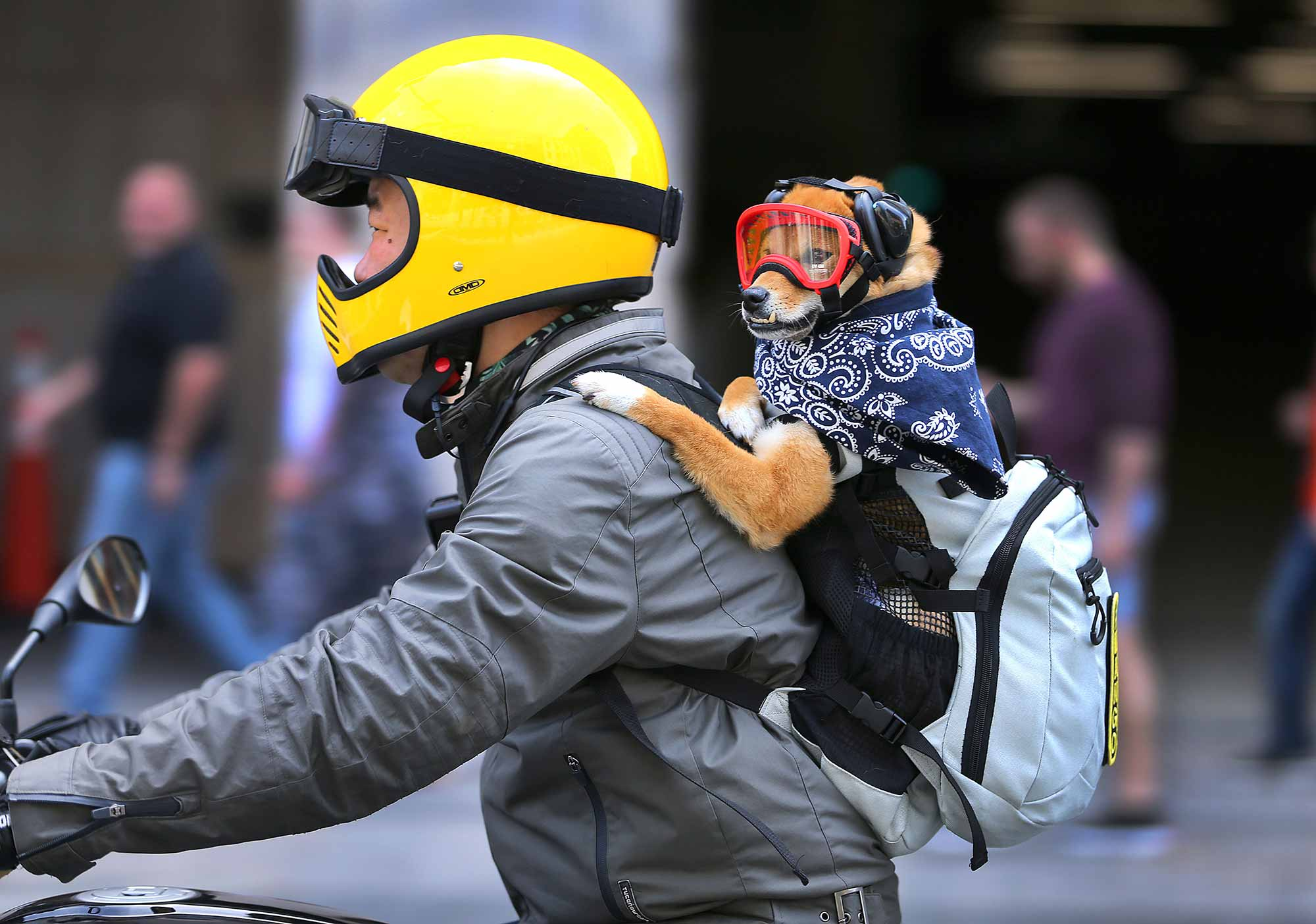 dog in backpack riding a motorcycle
