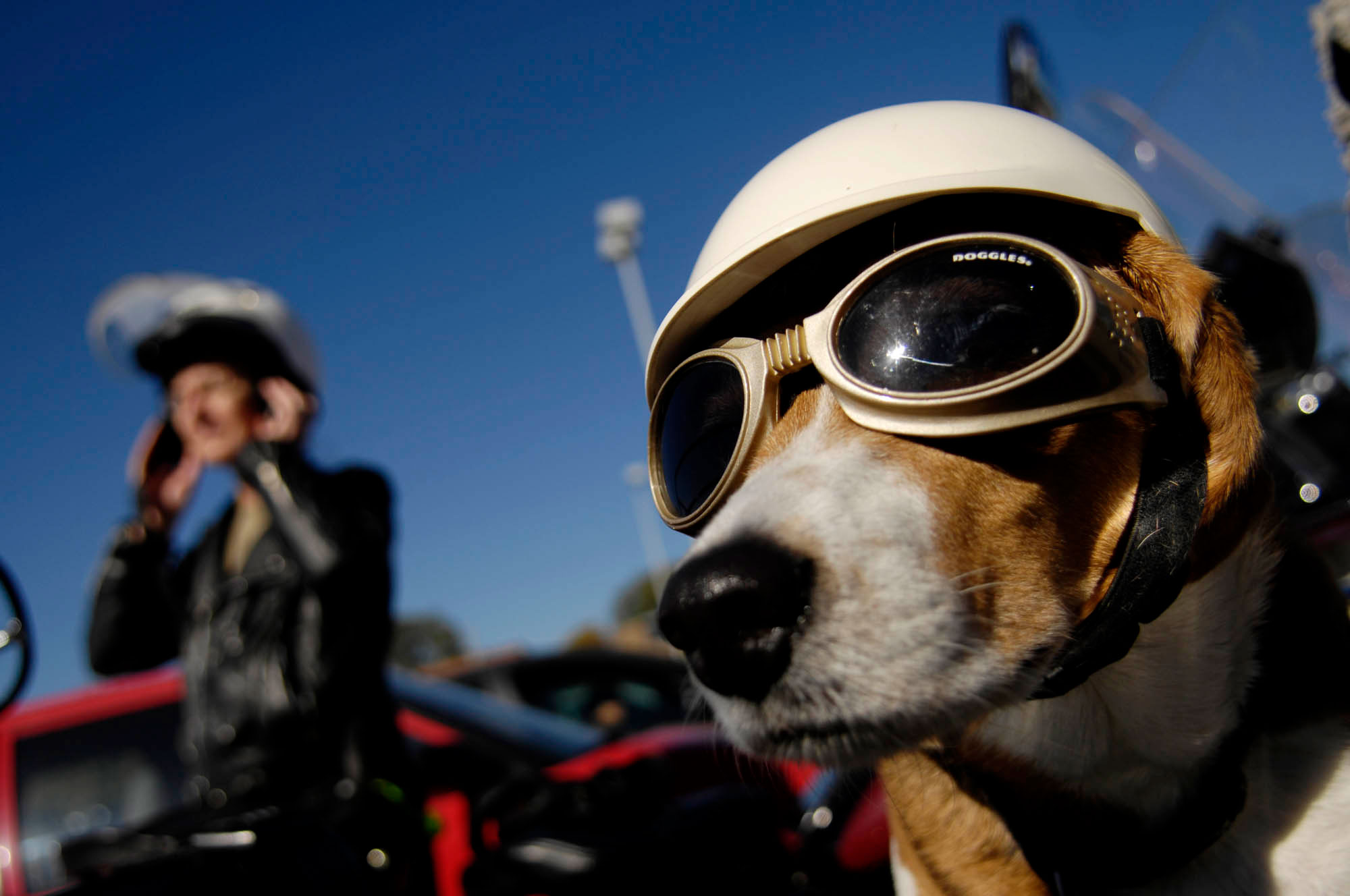 Sidecar companion, Amy, has doggles and a helmet to keep her safe on the ride