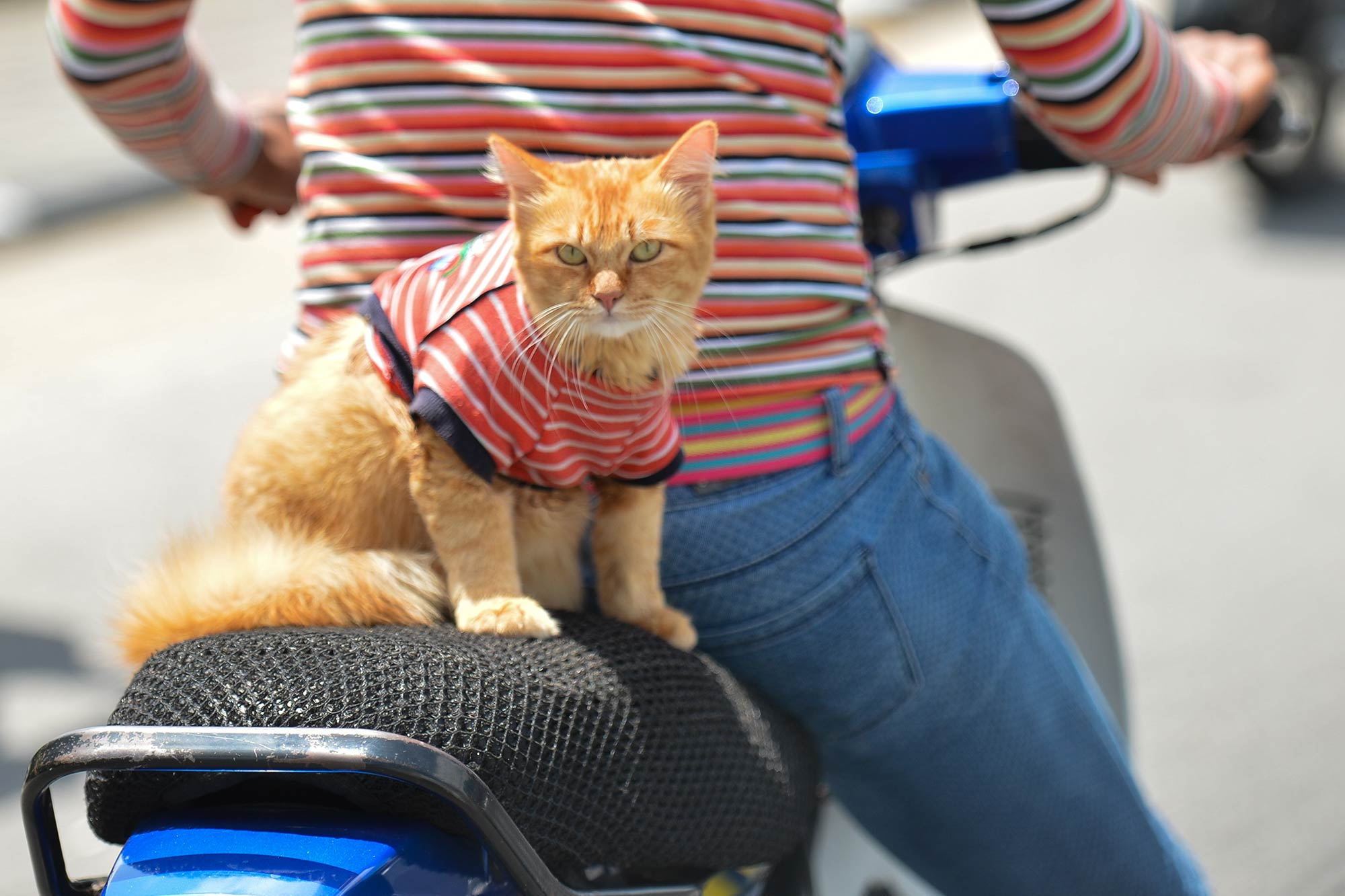 One scooter rider in Malaysia likes to dress up his cat in matching t-shirts.