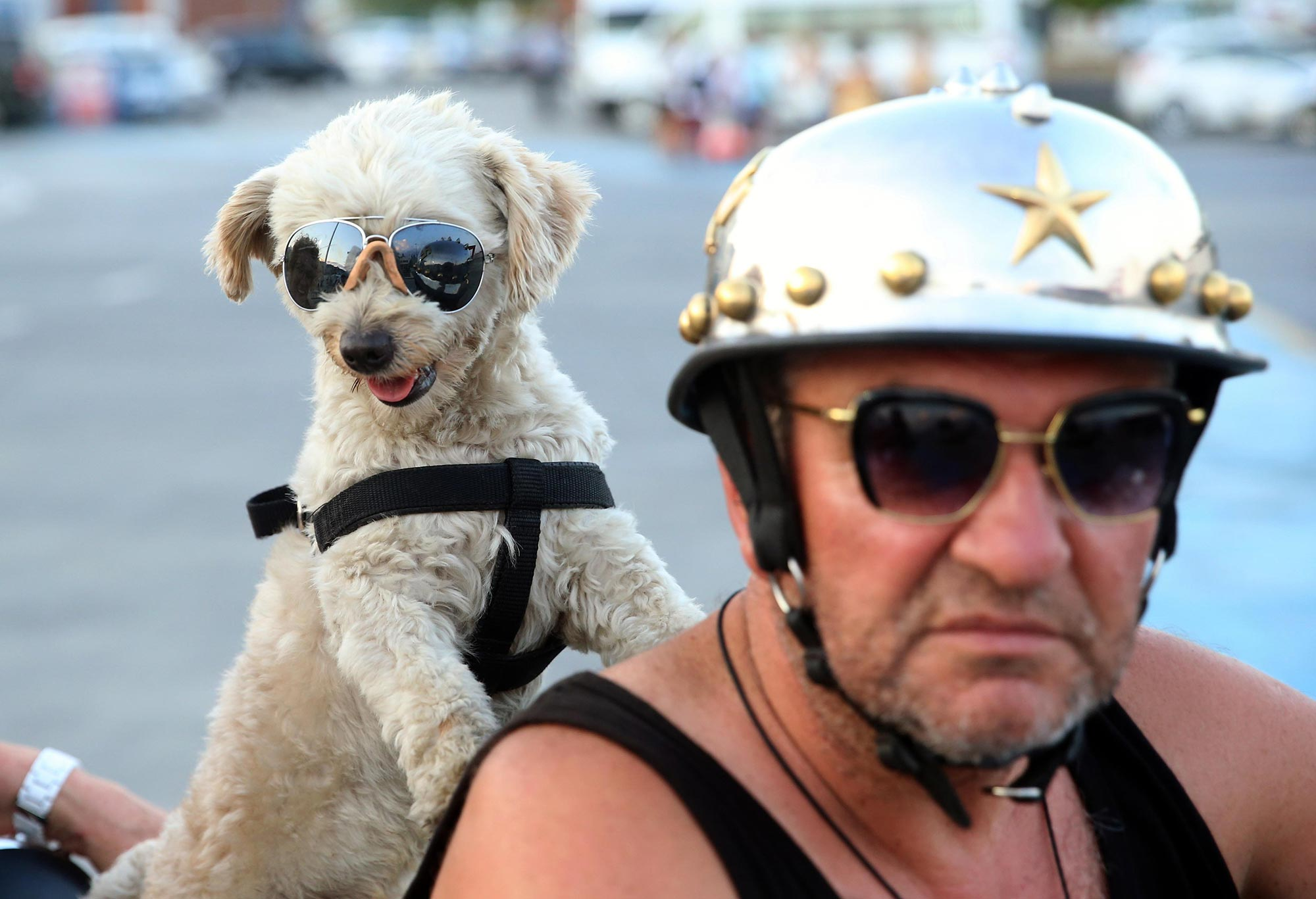 Haki Usta and his dog Kafe have been riding together for years–they even have matching shades