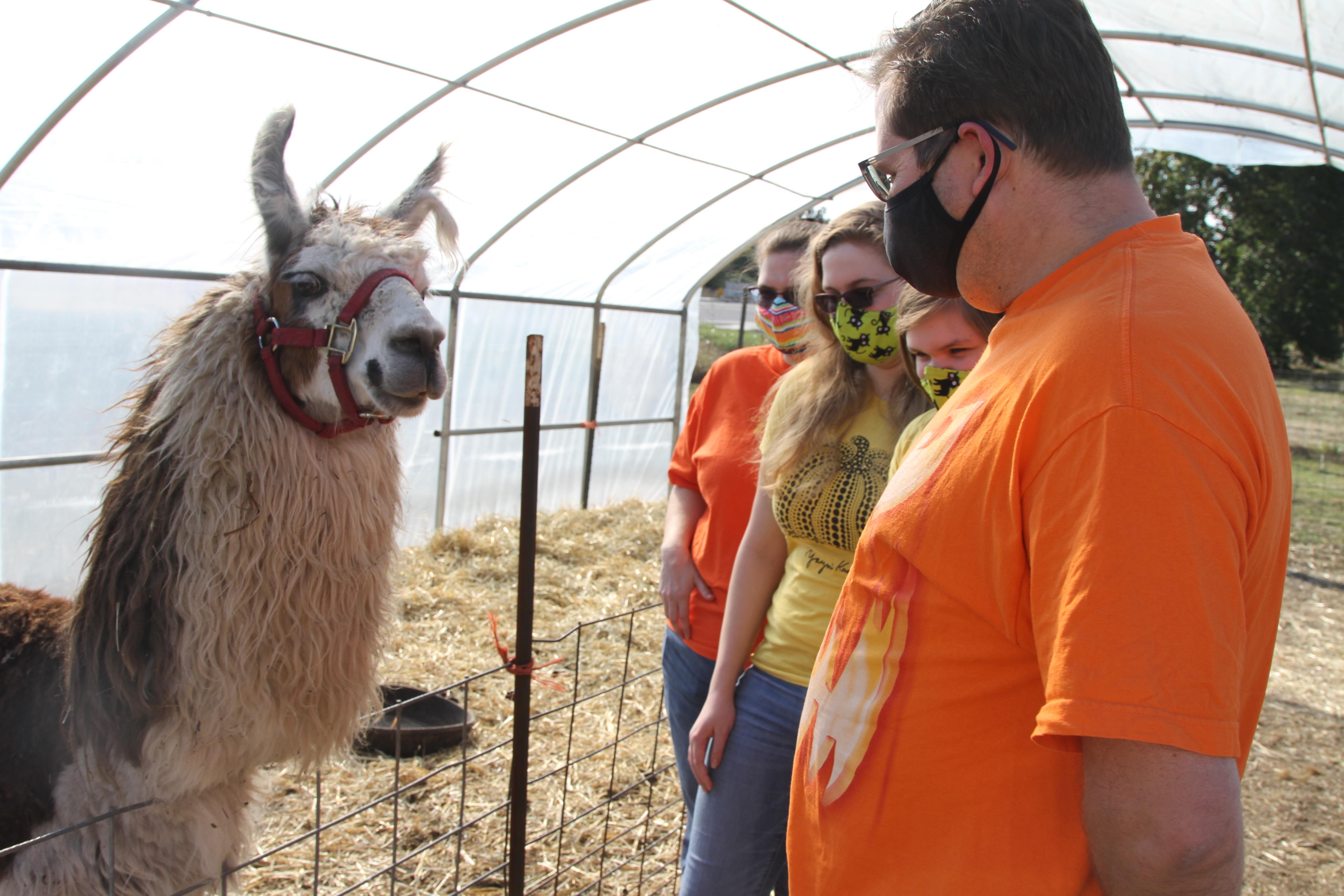 Jeremy, Annabelle, Juliette and Kristie Hauss meet the llama at an acceptable social distance at Bi-Zi Farms pumpkin patch.