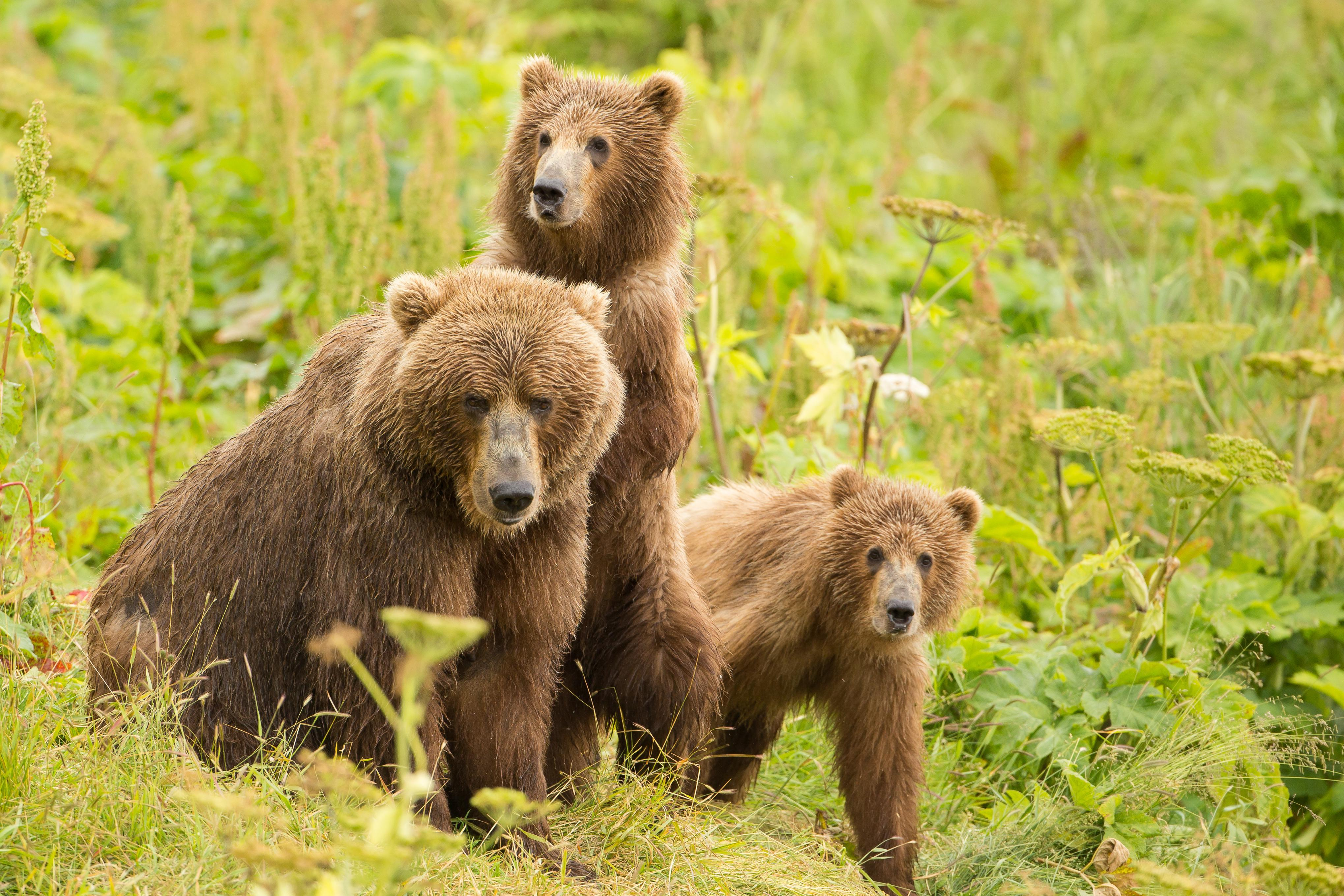 As grizzly bears expand their ranges throughout Montana, people say there could be lessons learned for Washington's North Cascades.