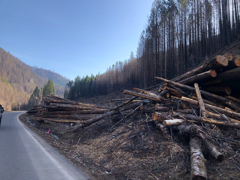 Hazard tree removal along Forest Service Road 46 near Detroit, where the Lionshead Fire burned more than 200,000 acres.