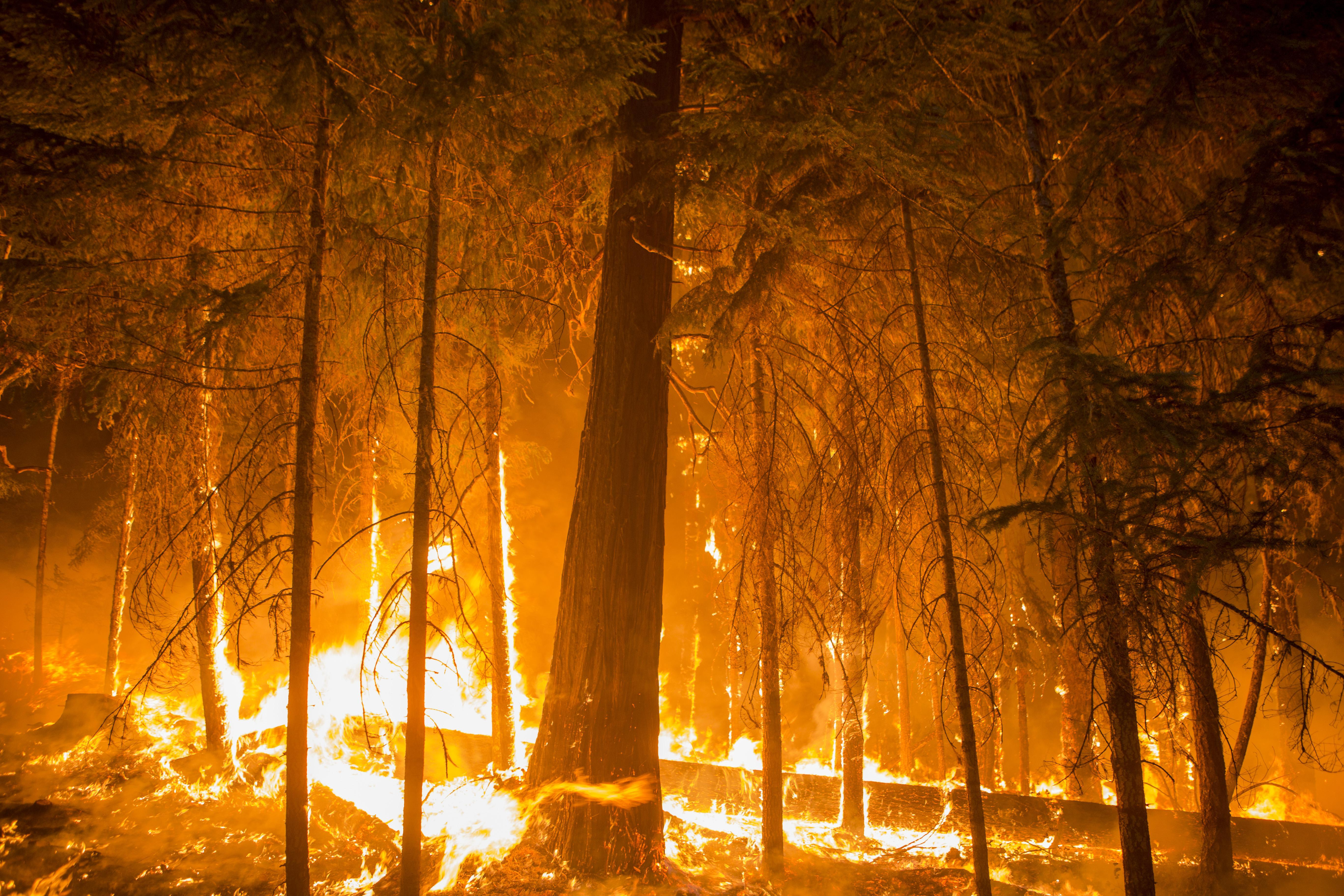 A blaze burns in the Umpqua National Forest in 2017.