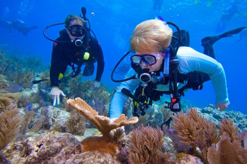 2010, NOAA chief Jane Lubchenco participating in coral restoration in Florida.