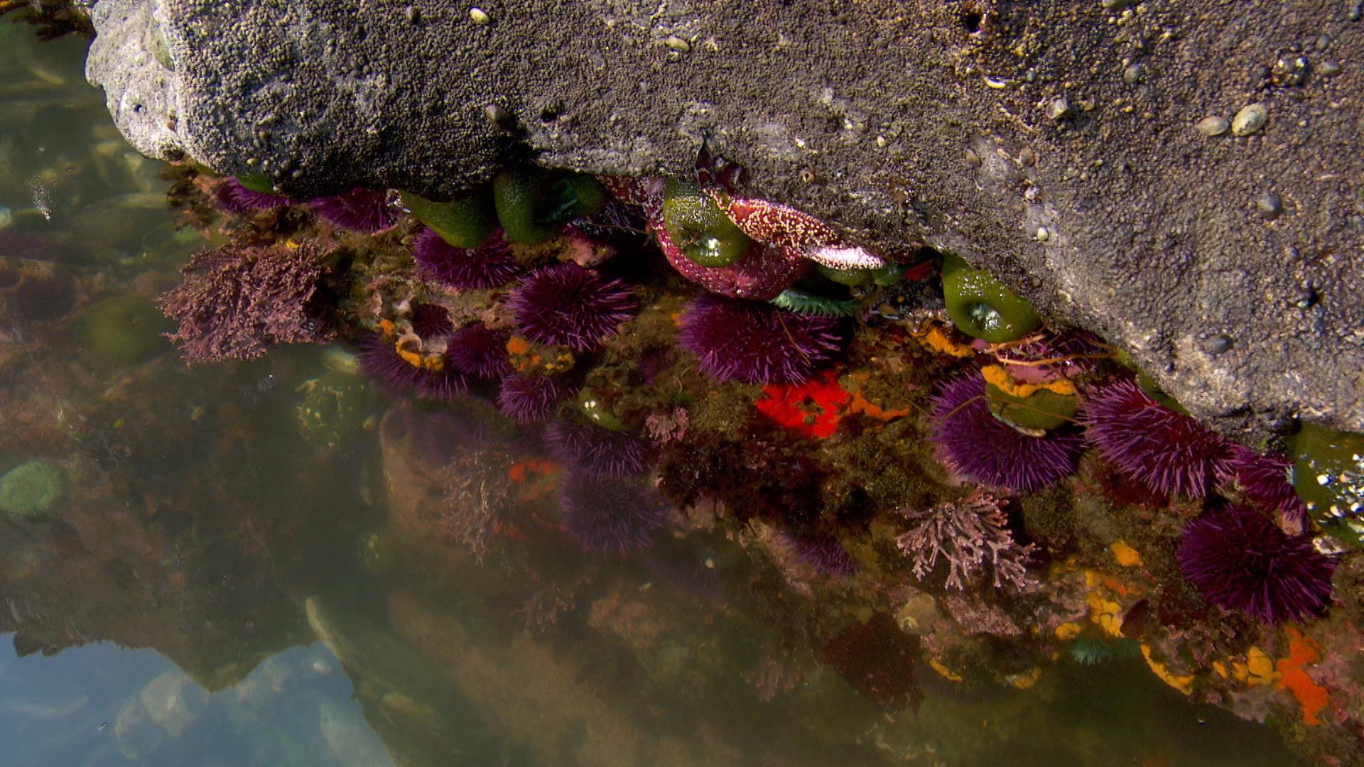 Southern Oregon's Cape Arago has some of the most scenic tide pools anywhere.