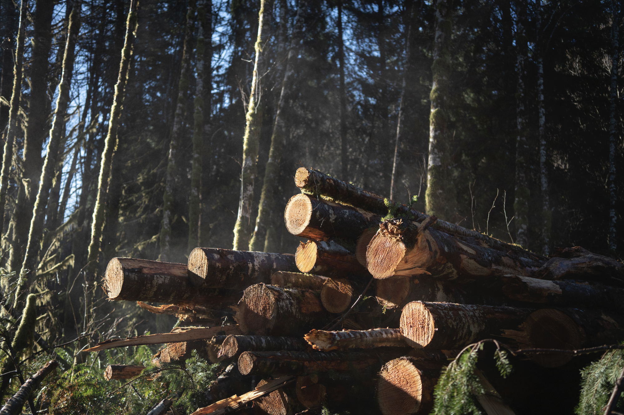 "Logging near Wheeler, Oregon, recently. According to Brooks Mendell, president of the forest investment consultancy Forisk, lumber producers are ""generating unbelievable margins right now, record margins and profits."""