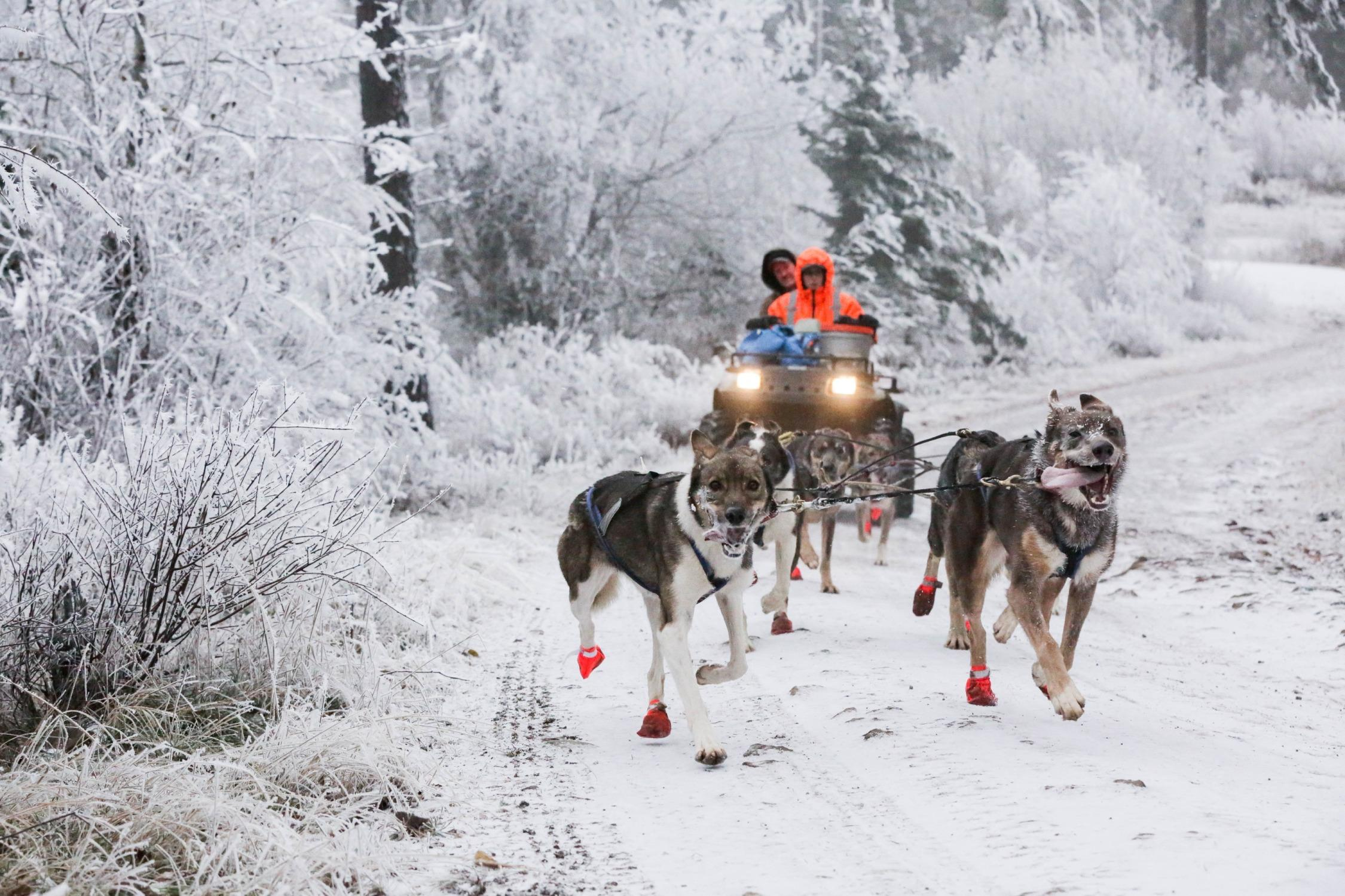 Sharon Nuckols and Tim Curley guide their team down a frosty forest road in Mosier, Oregon.