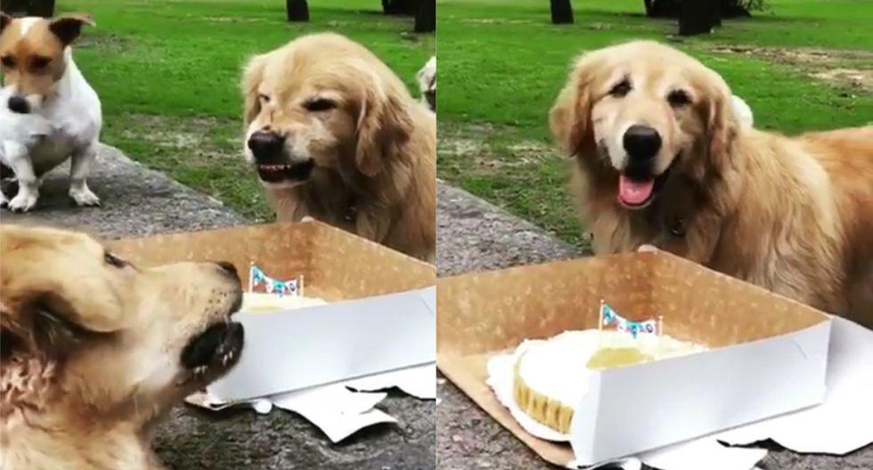 La actitud del perro que en su cumpleaños dejó en claro que no iba a compartir torta