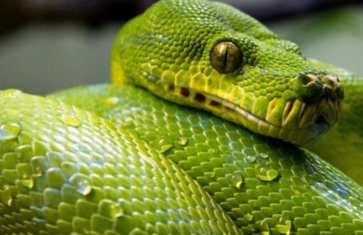 Qué Significa Soñar Con Serpientes Un Sueño Que Se Repite Mucho La 100
