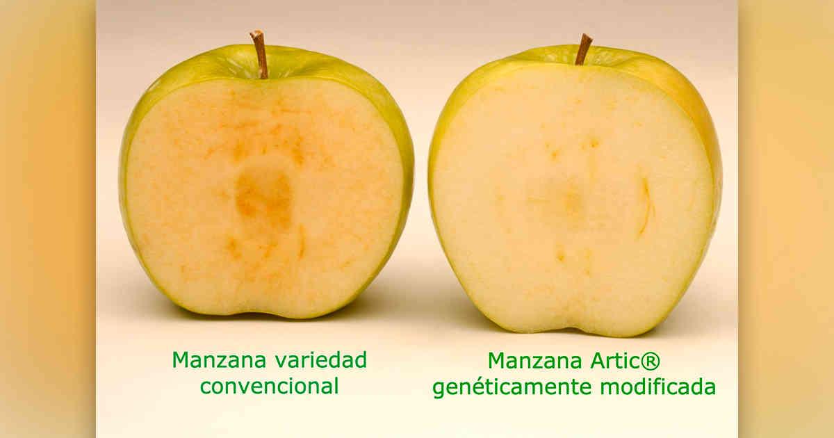 Primera manzana transgénica se venderá en Estados Unidos desde febrero