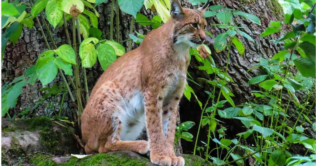 Mas De La Mitad De La Poblacion Animal De Los Bosques Ha Desaparecido