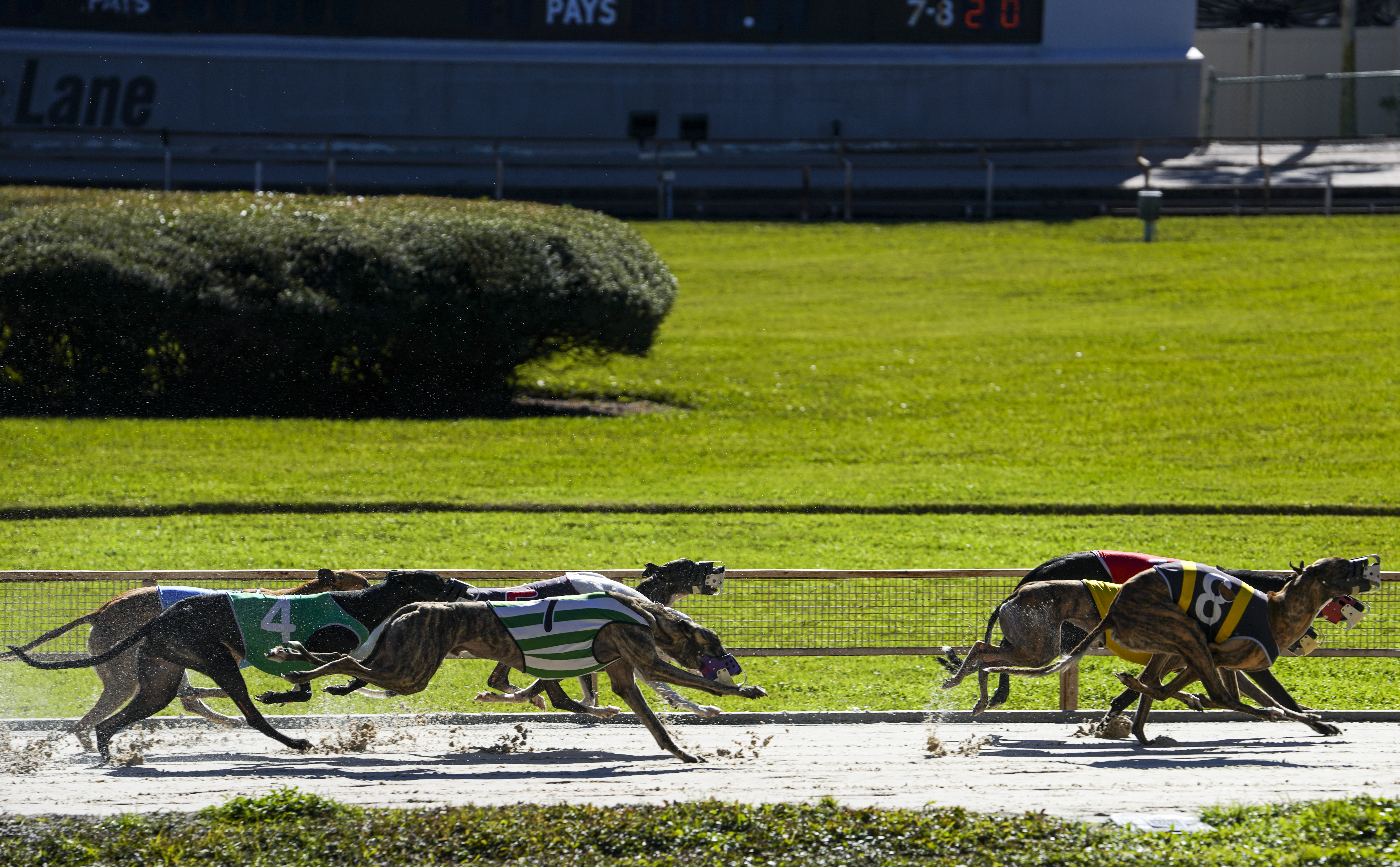 Greyhound racing betting rules of 21 agents arrested for stealing bitcoins